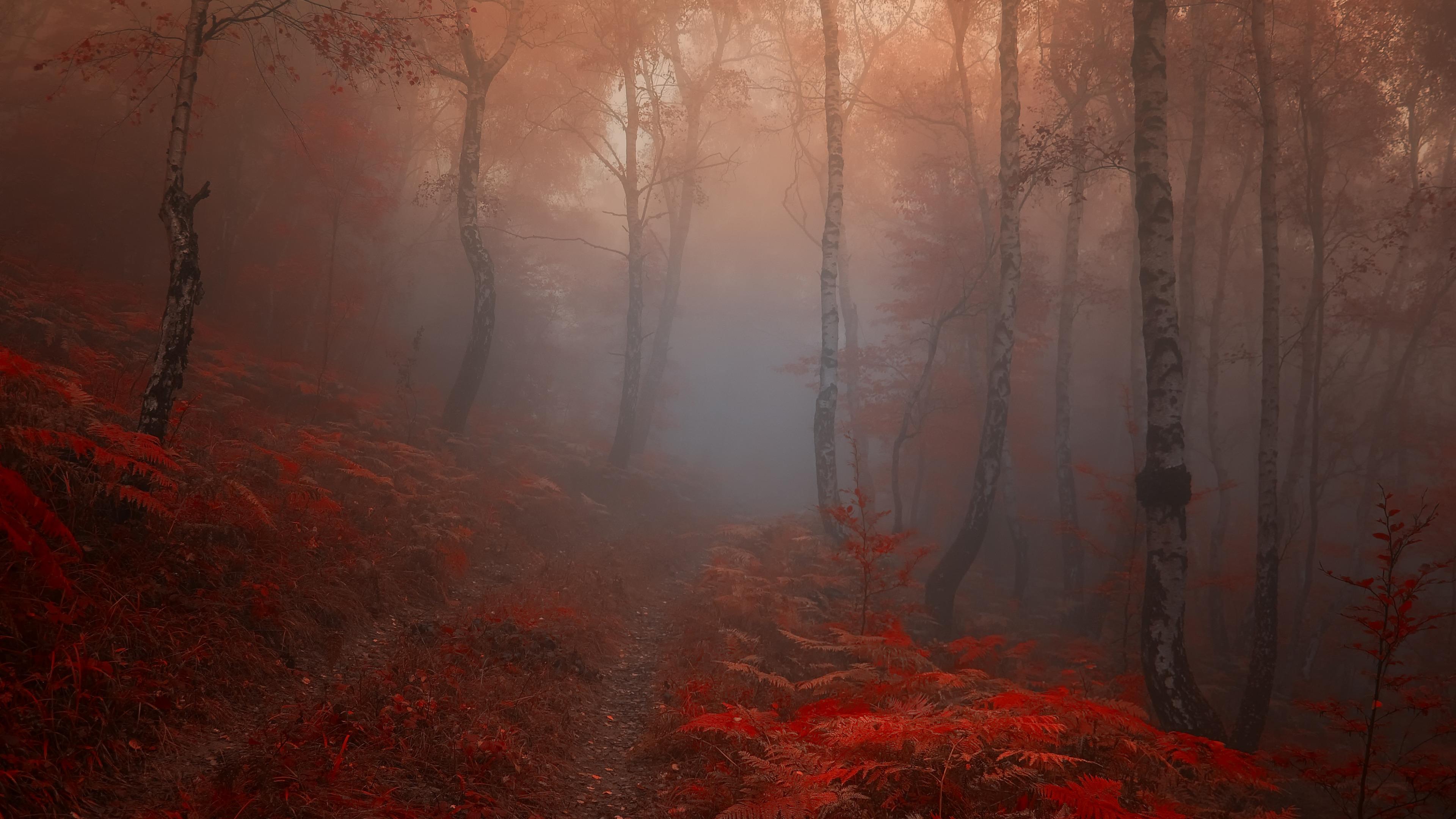 красный осенний лес  № 249313 загрузить