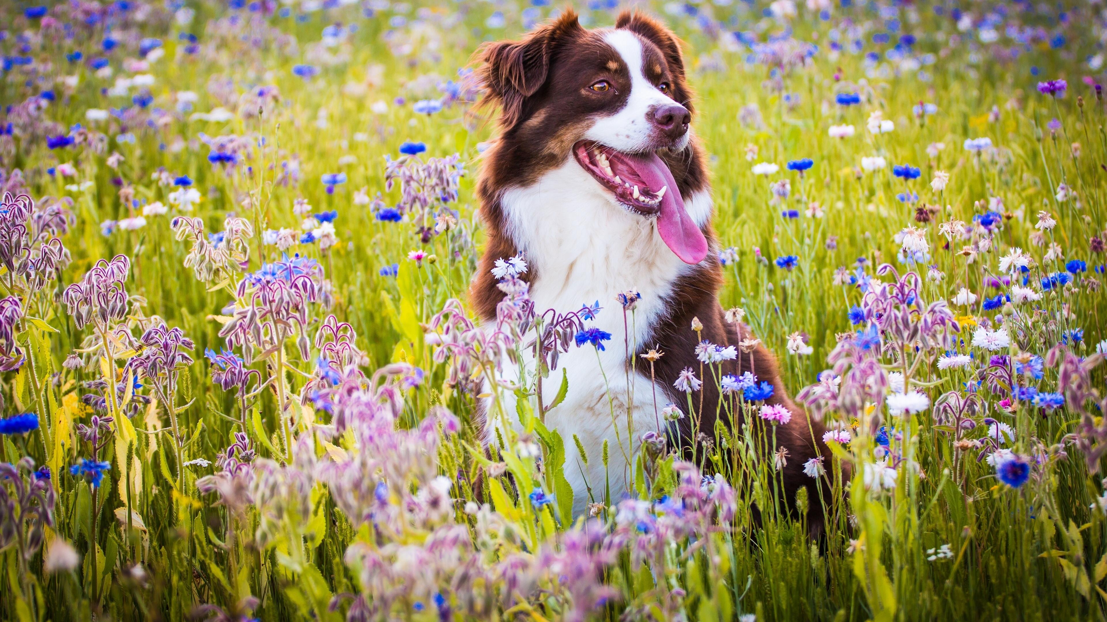 собачка трава лето  № 3650110 бесплатно