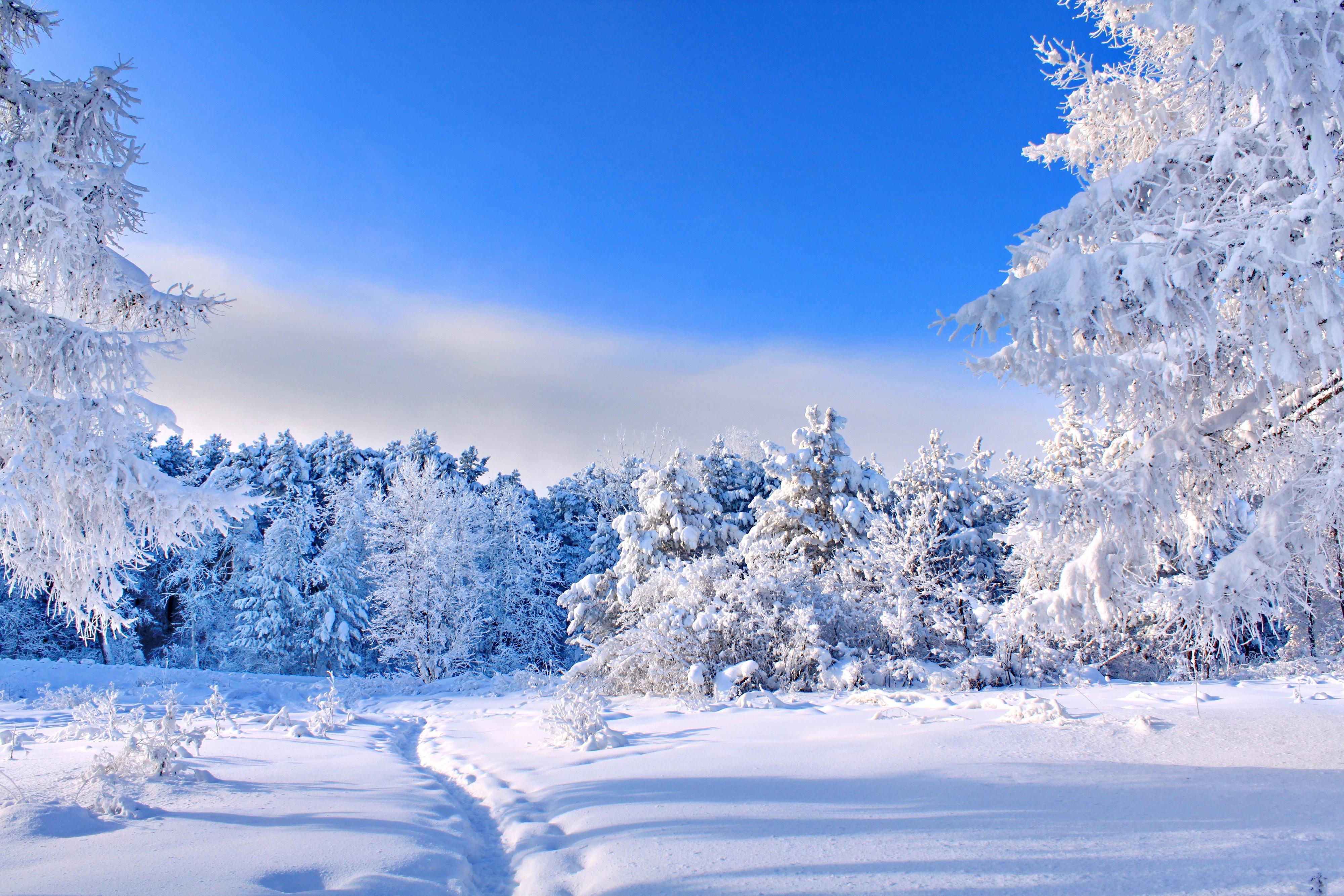 зимний солнечный лес  № 310355 без смс
