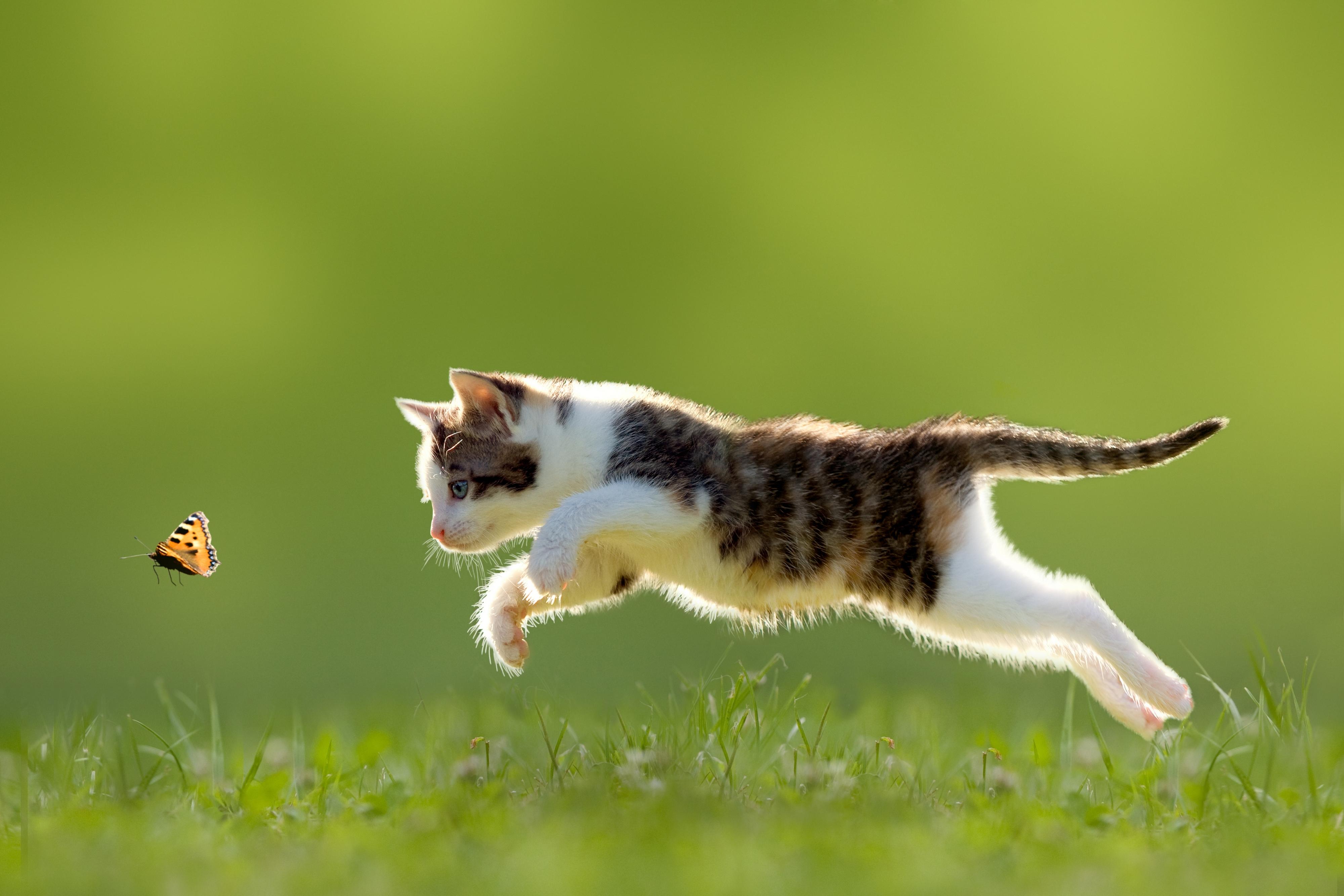 живые обои на рабочий стол кошка ходит по монитору № 177749 бесплатно