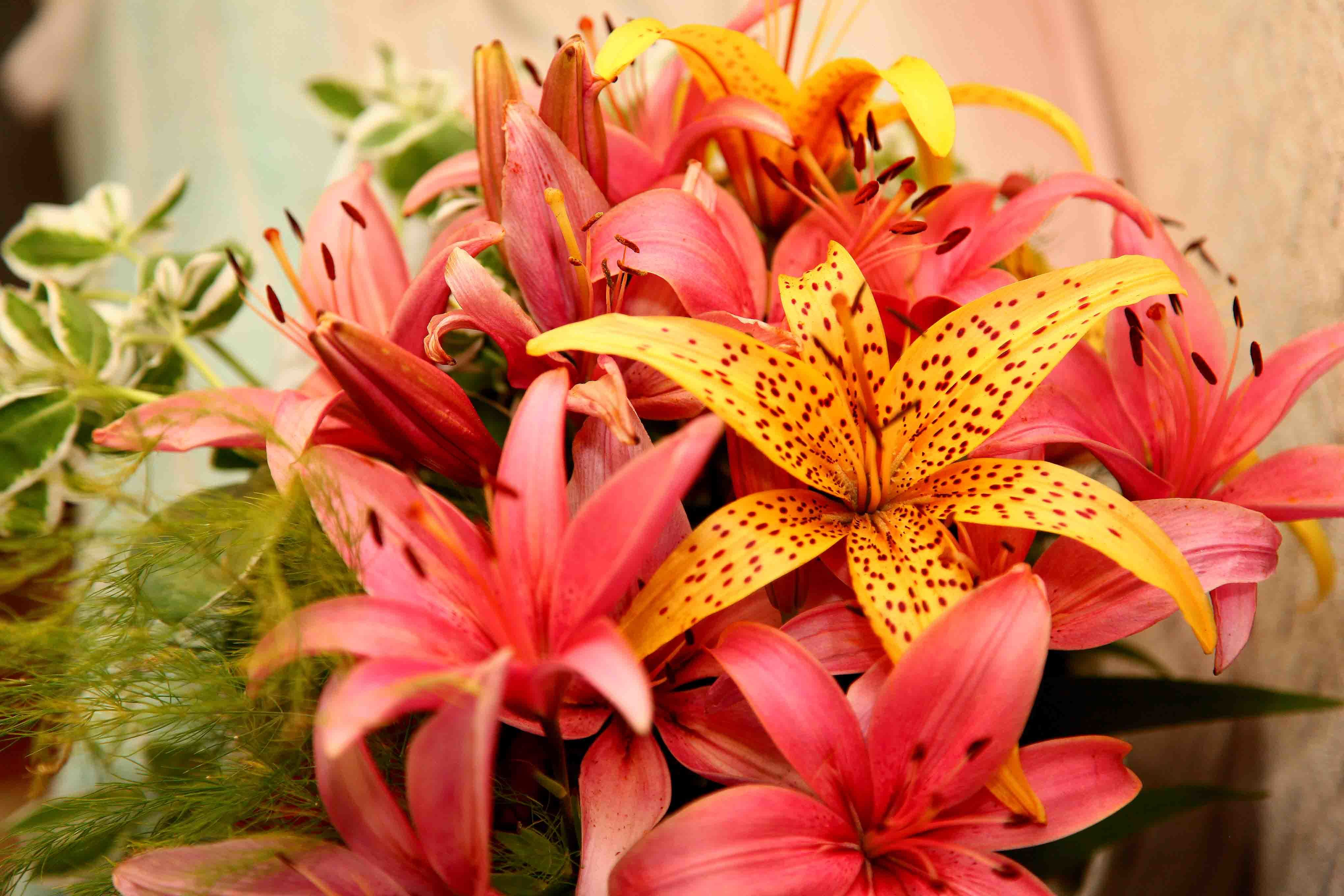 Фото букетов цветов лилии