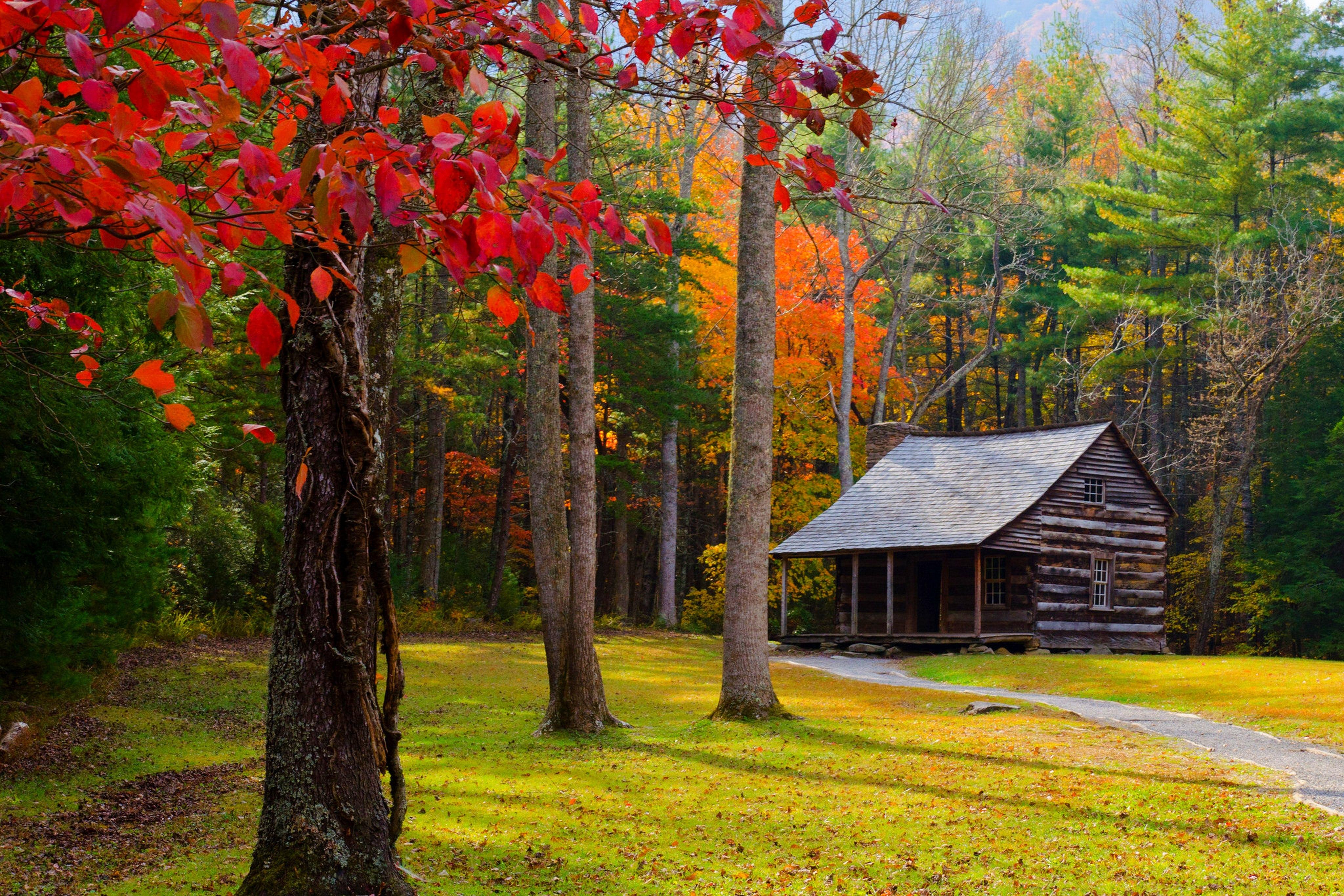 природа озеро дом лес деревья  № 2447977 без смс