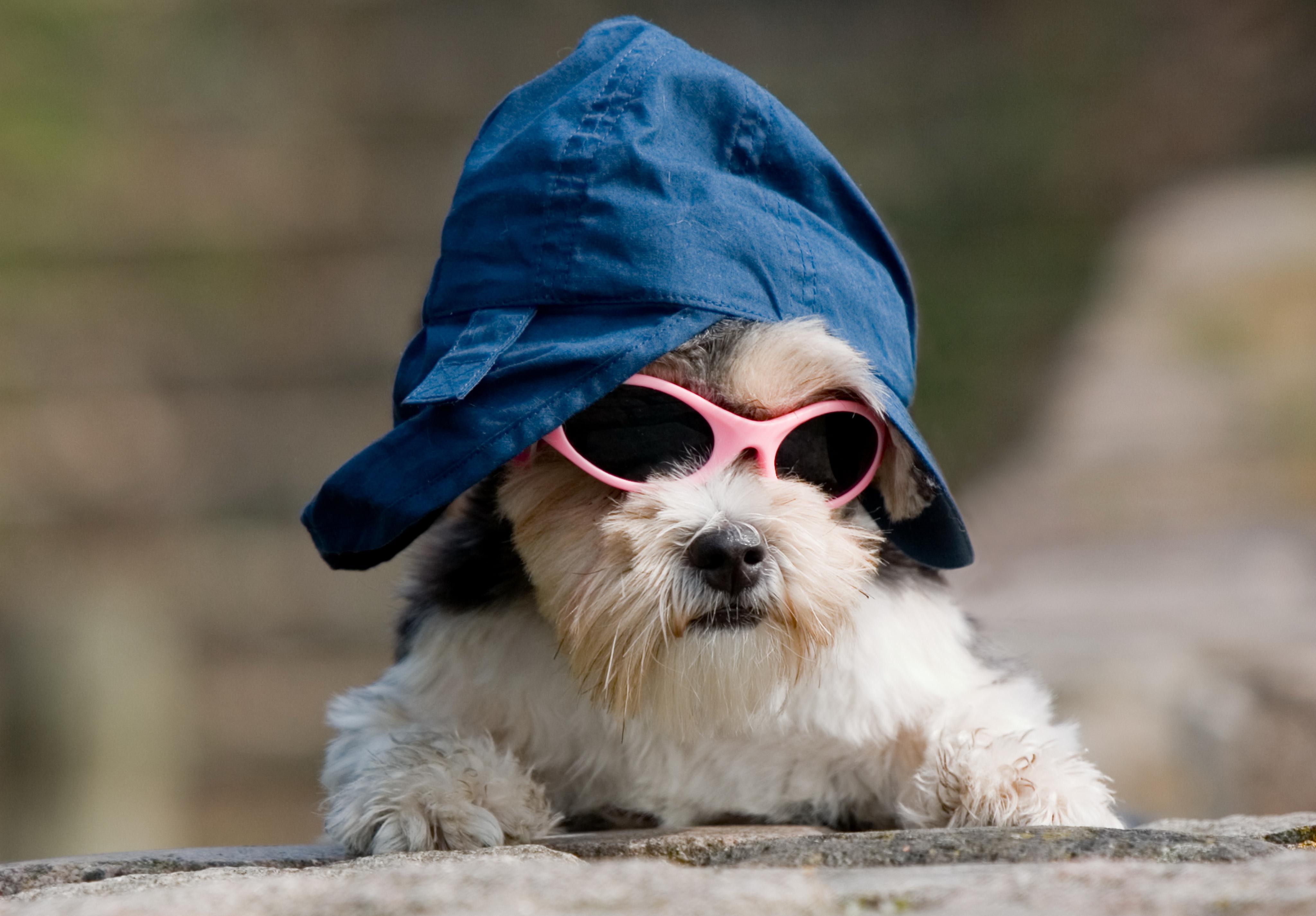 Окончанием дачного, крутые картинки собаки в очках