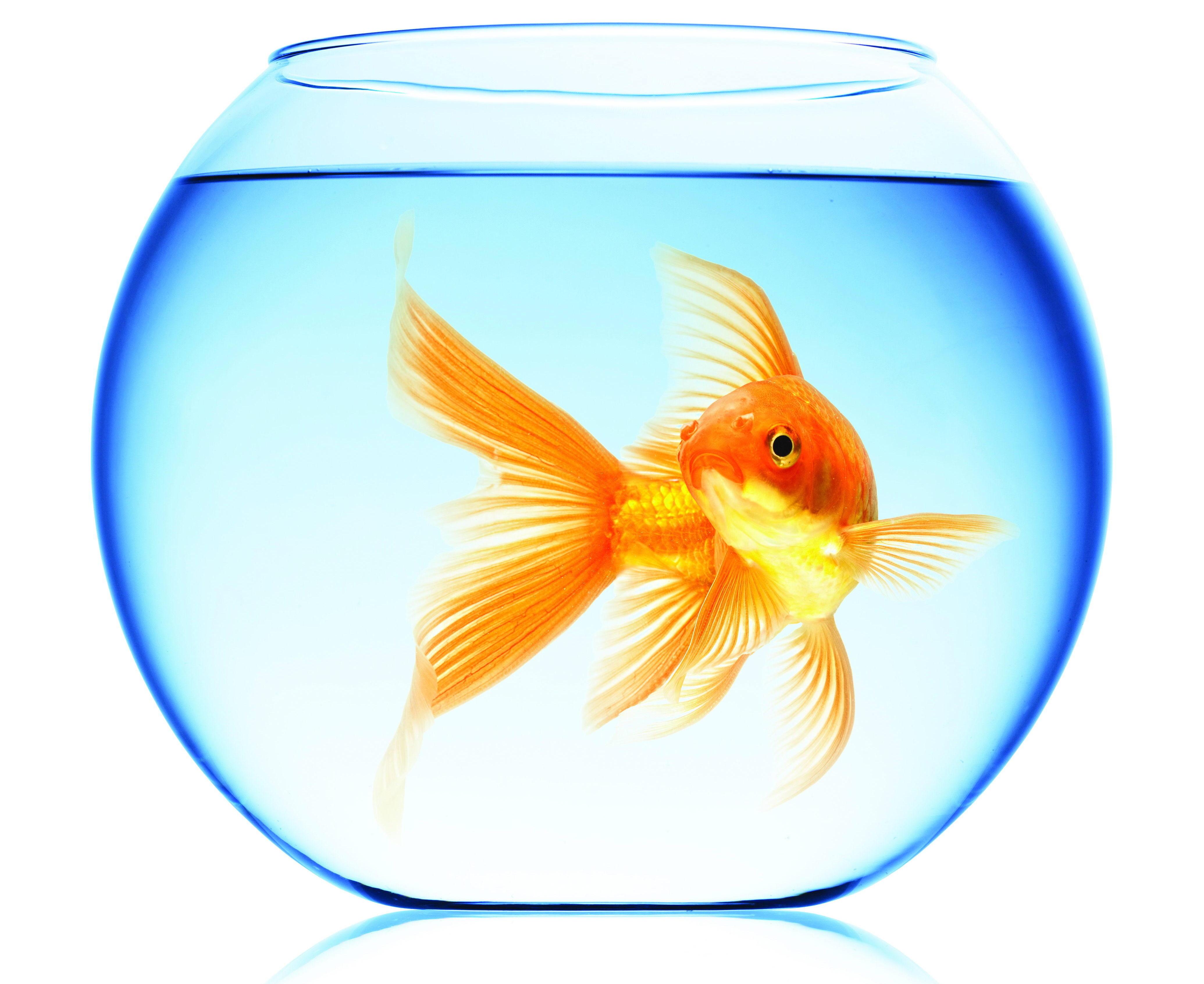 Рыба плывет картинки для детей
