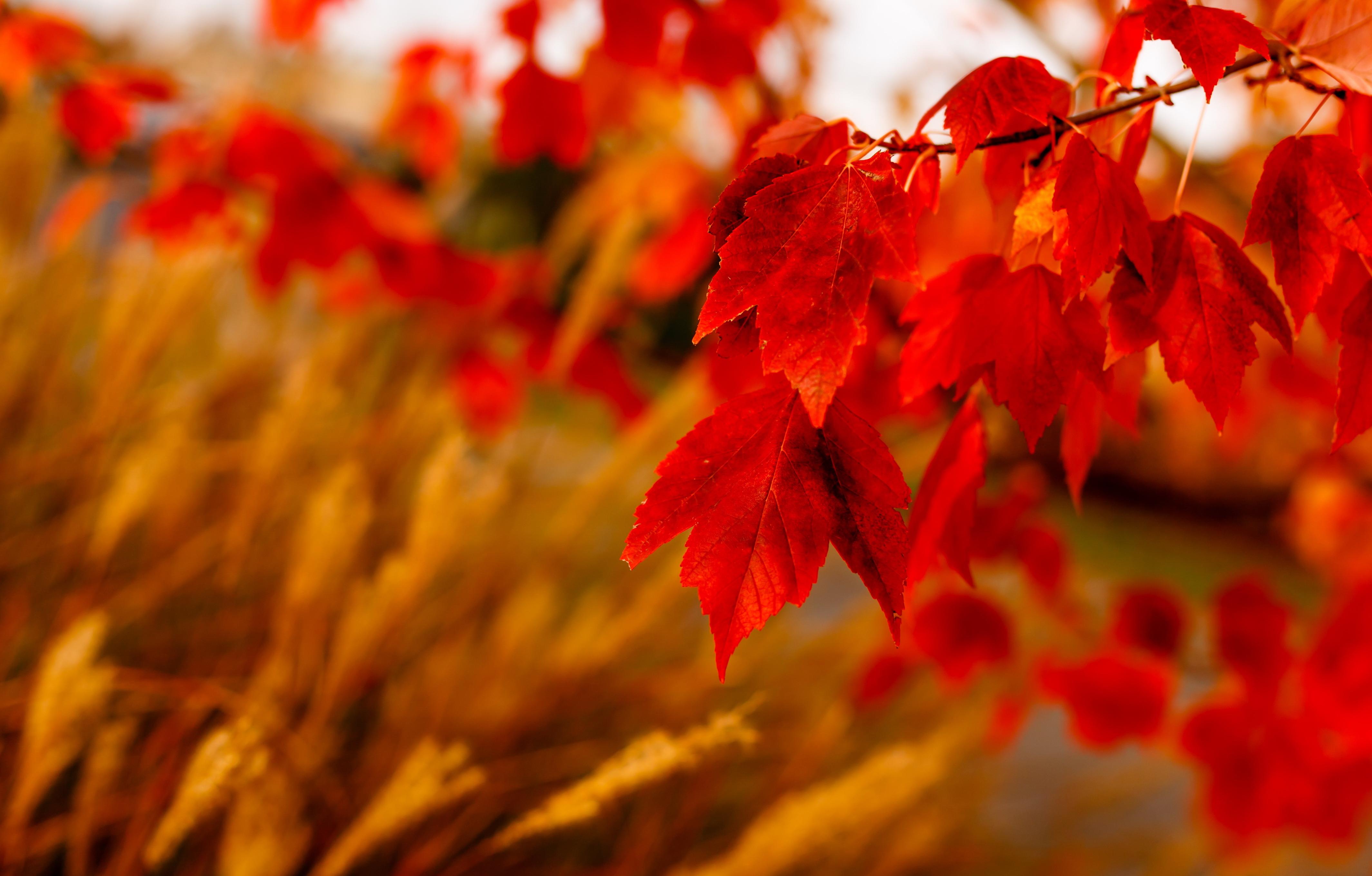 природа лист осень  № 543262 бесплатно
