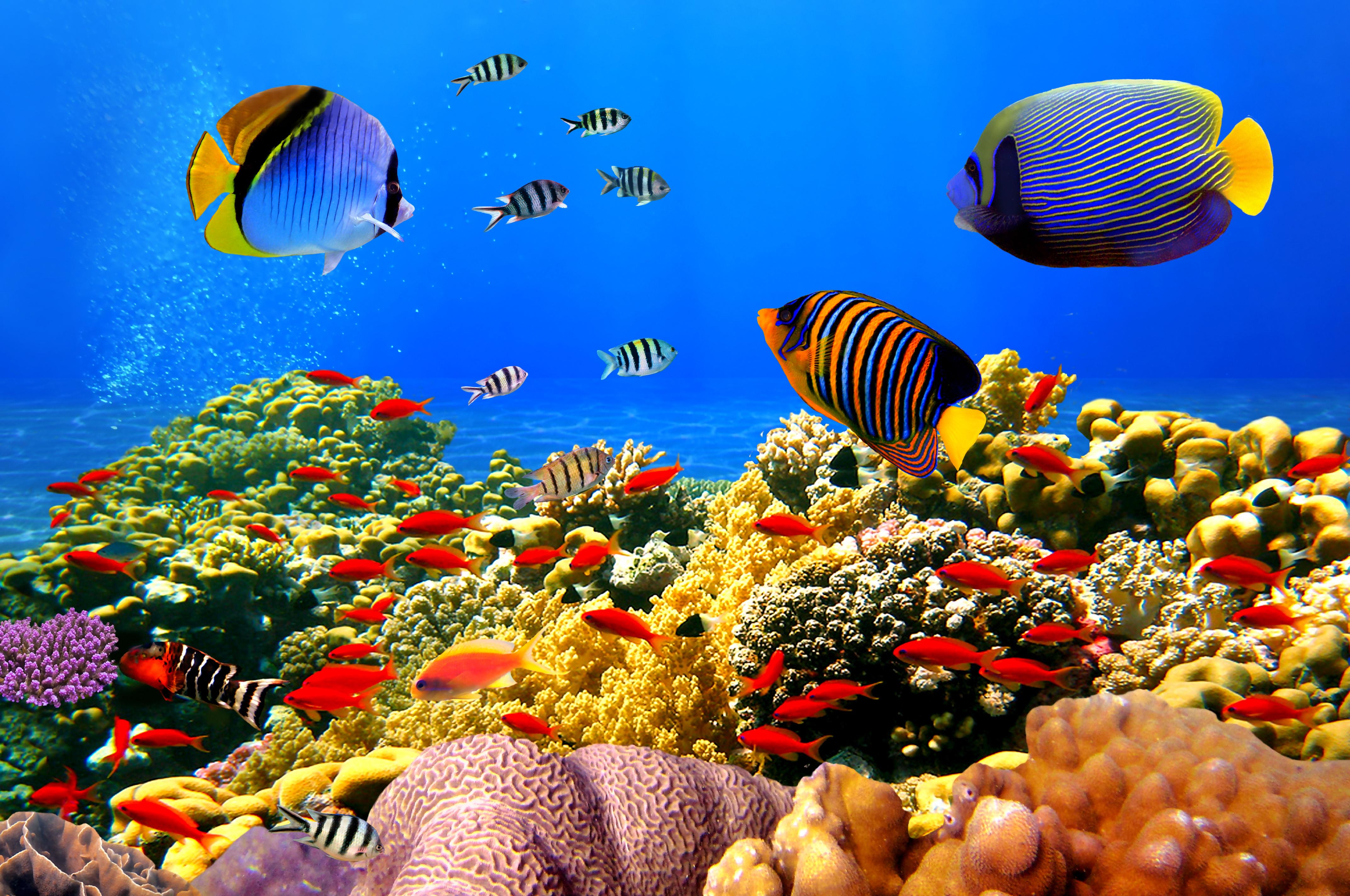 задумывался подводный мир картинки большого размера щенки