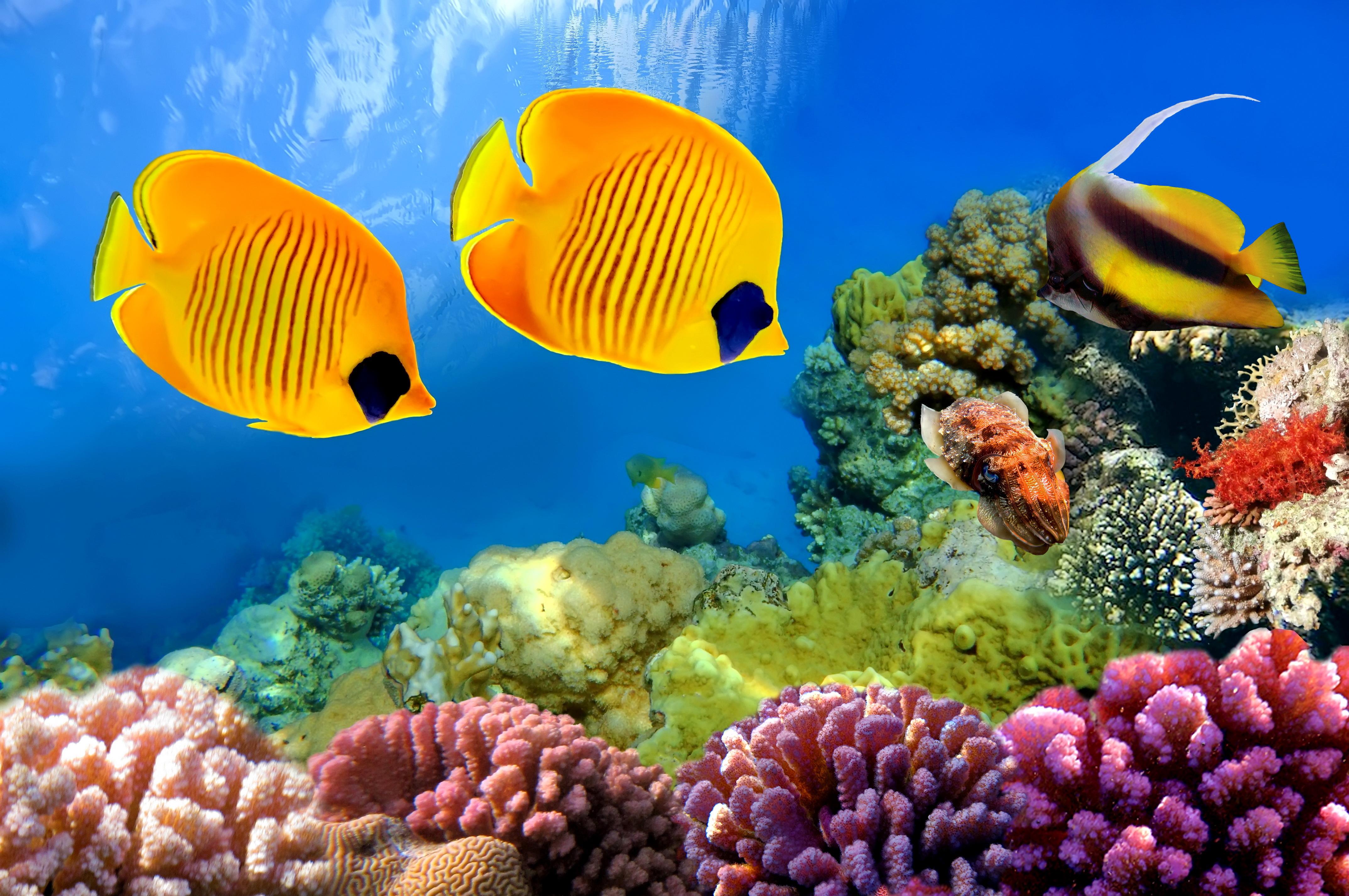 Природа картинки рыбы