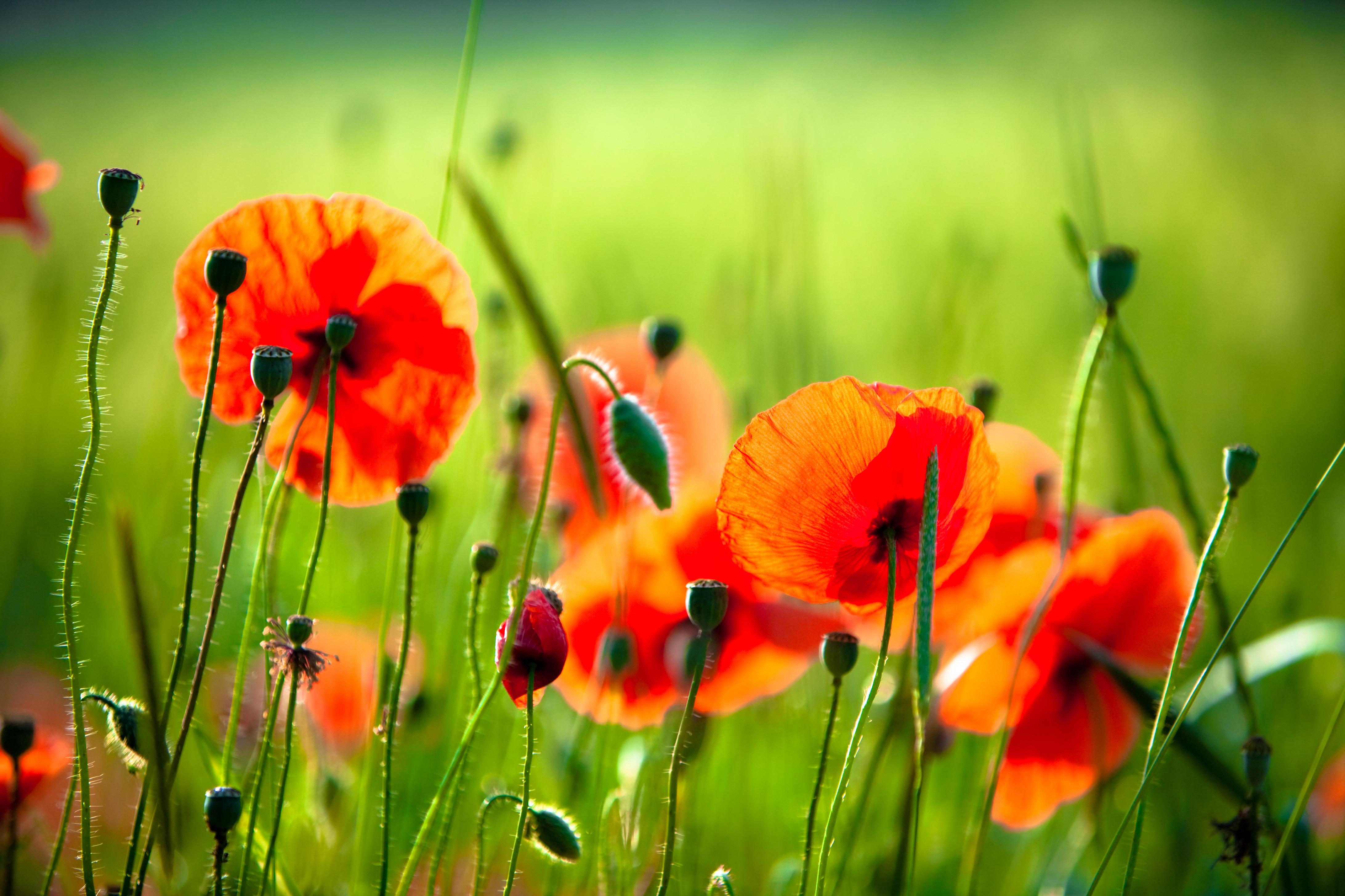 Красивые картинки природы цветов