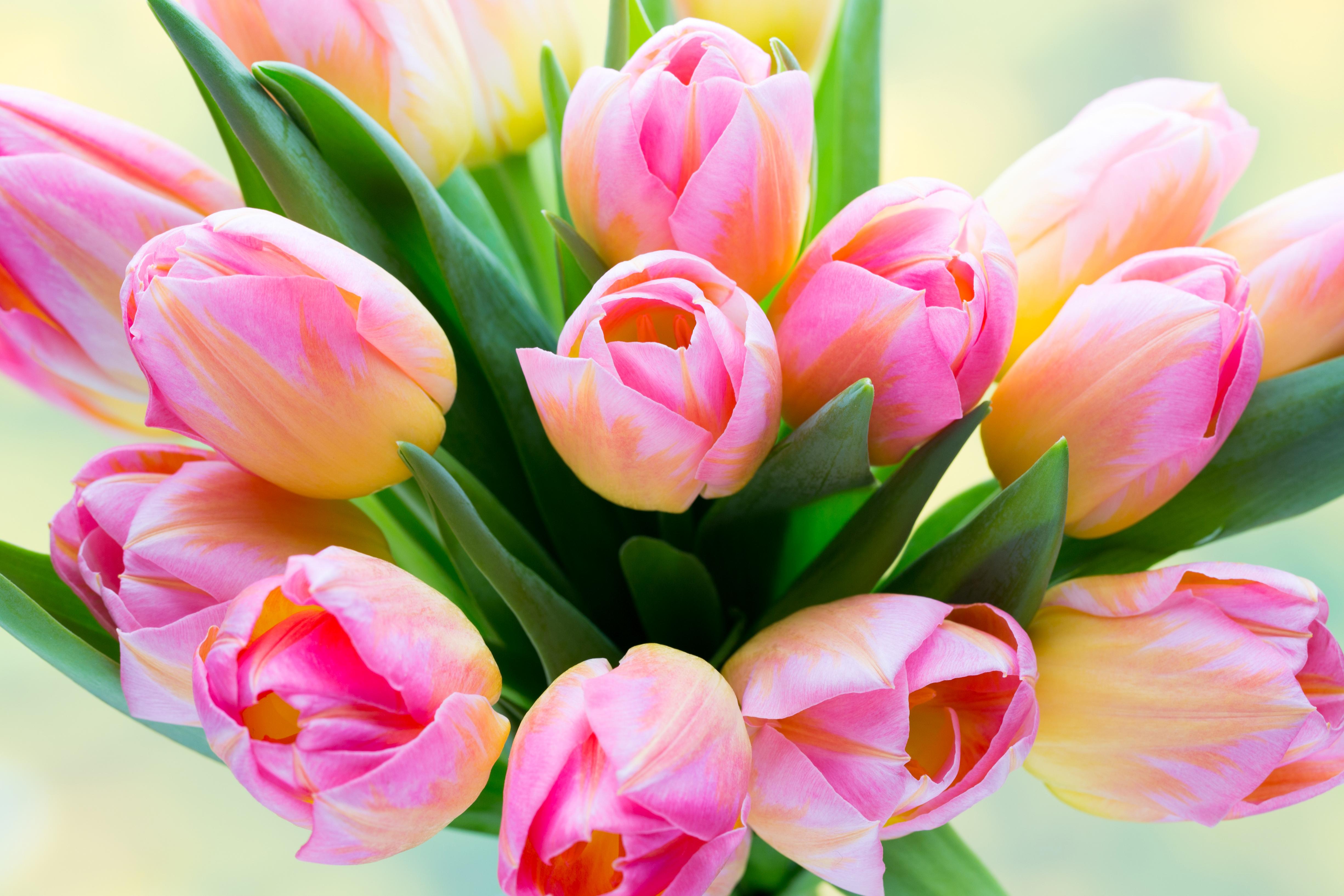 картинки на рабочий стол букеты тюльпанов развитие