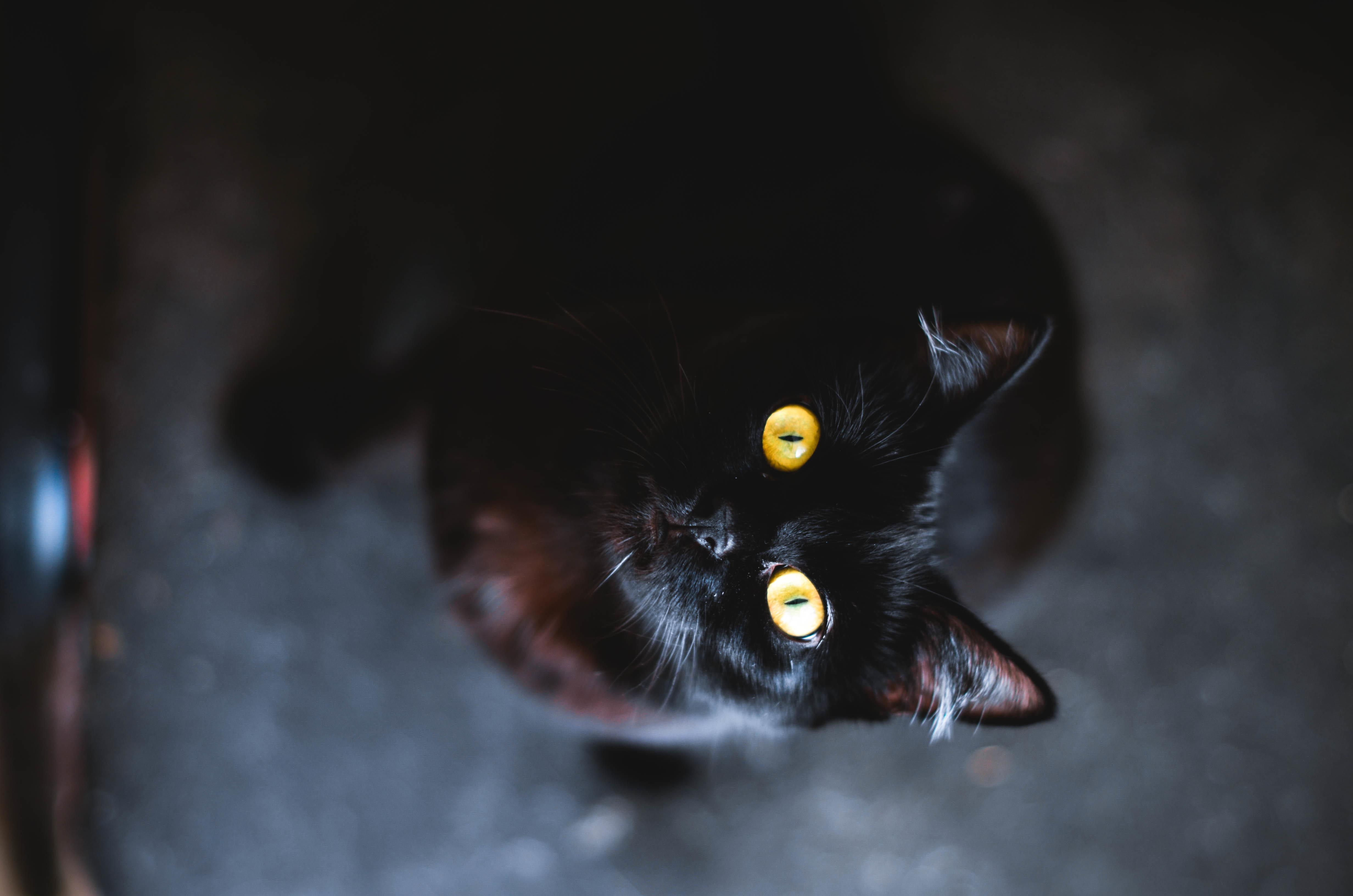 кошка зеленые глаза постель  № 3655485  скачать