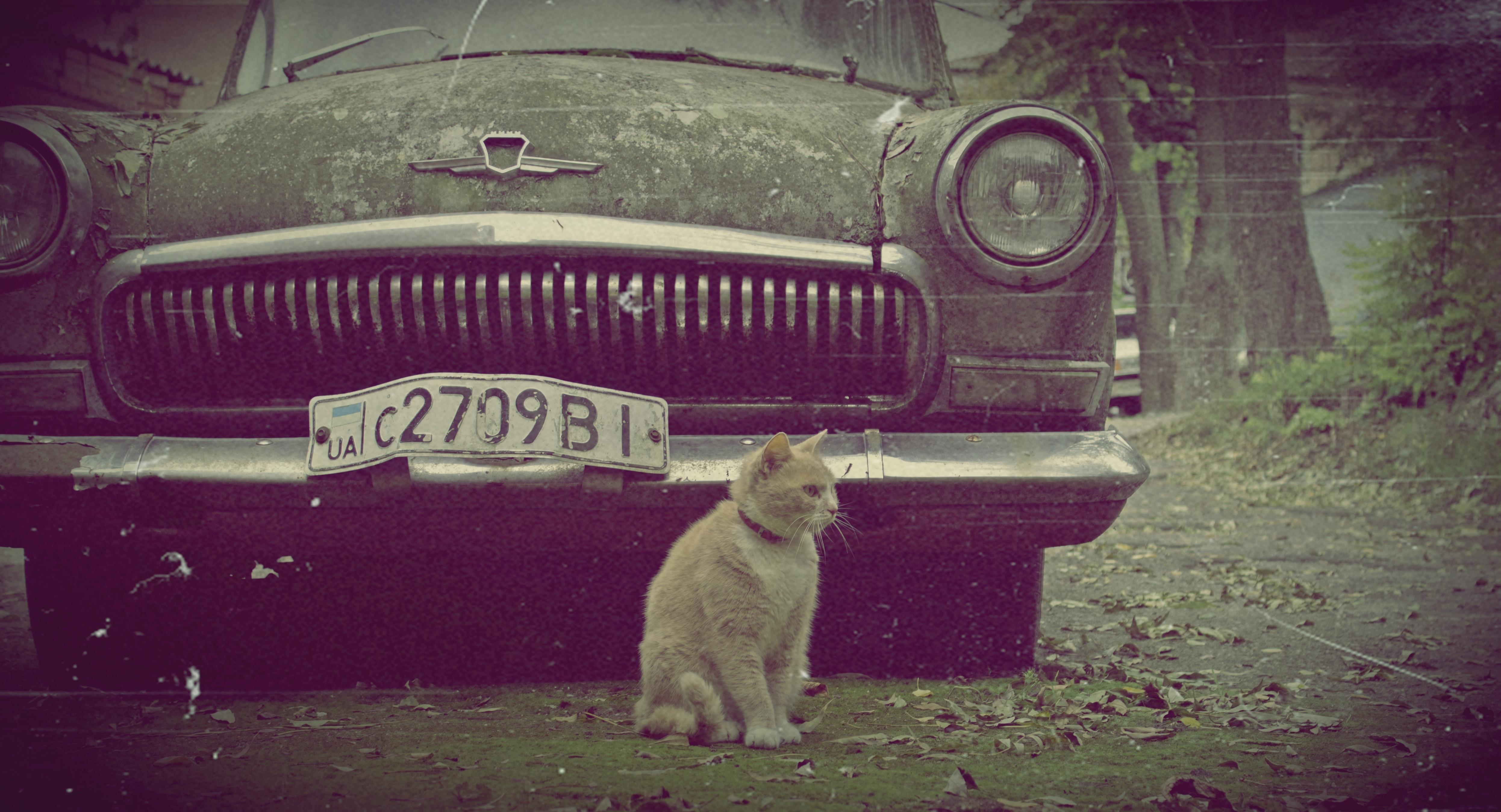 Кот на волге