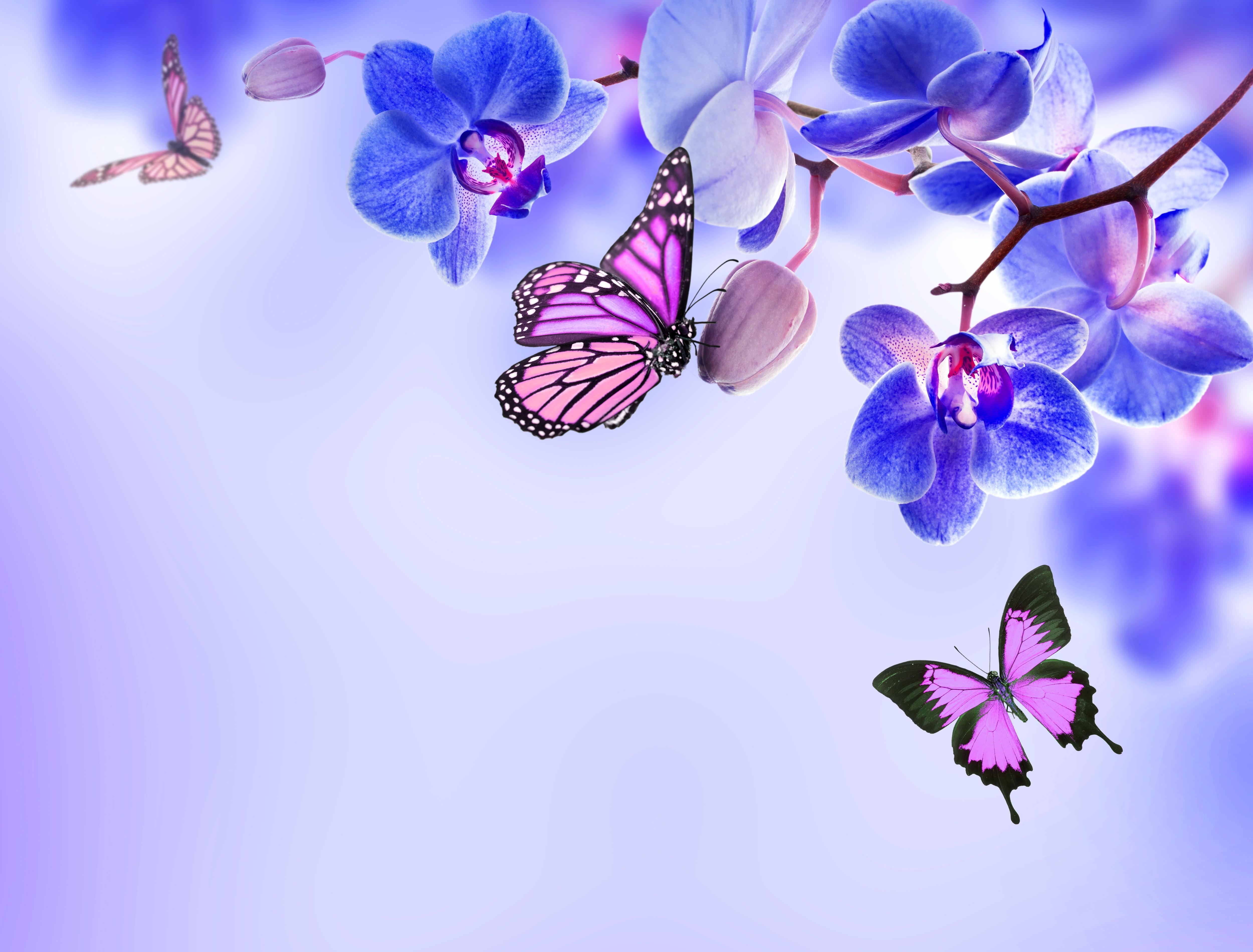Цветы и бабочки открытки