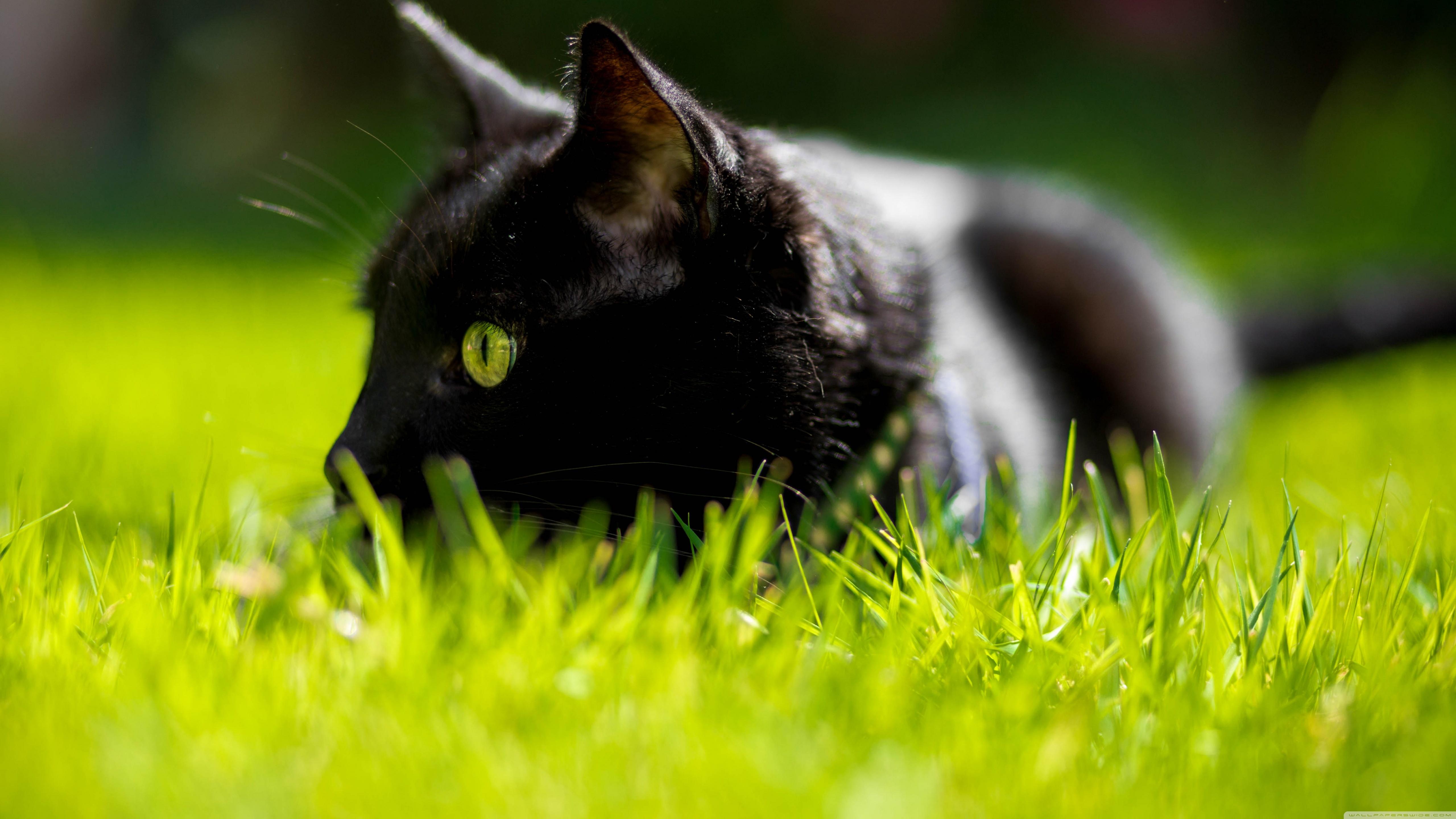 люблю картинки черный кот с зелеными как