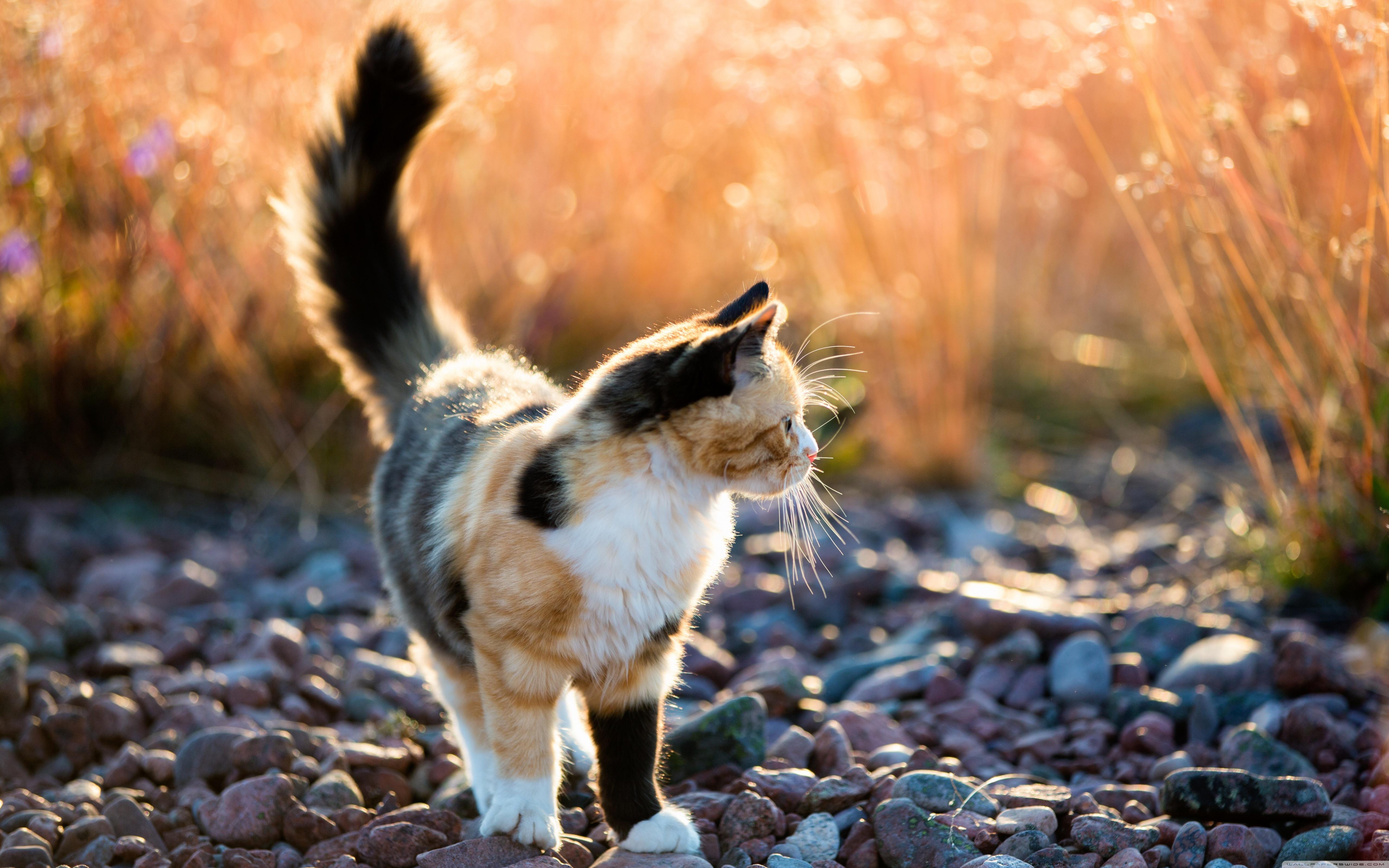 природа животные кот белый nature animals cat white  № 102812  скачать