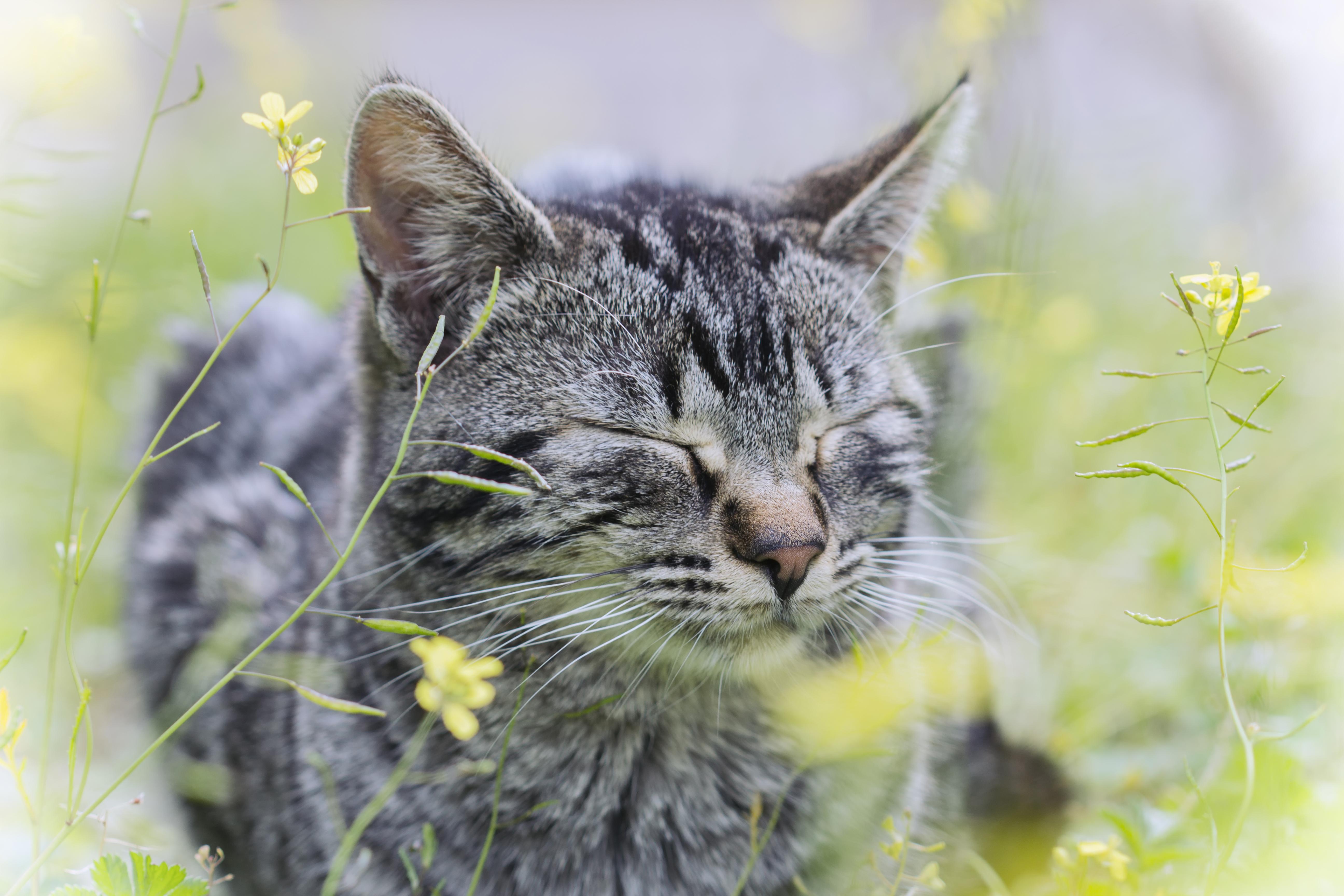 природа животные кот котенок серый журавлики nature animals cat kitten grey cranes  № 654704 бесплатно