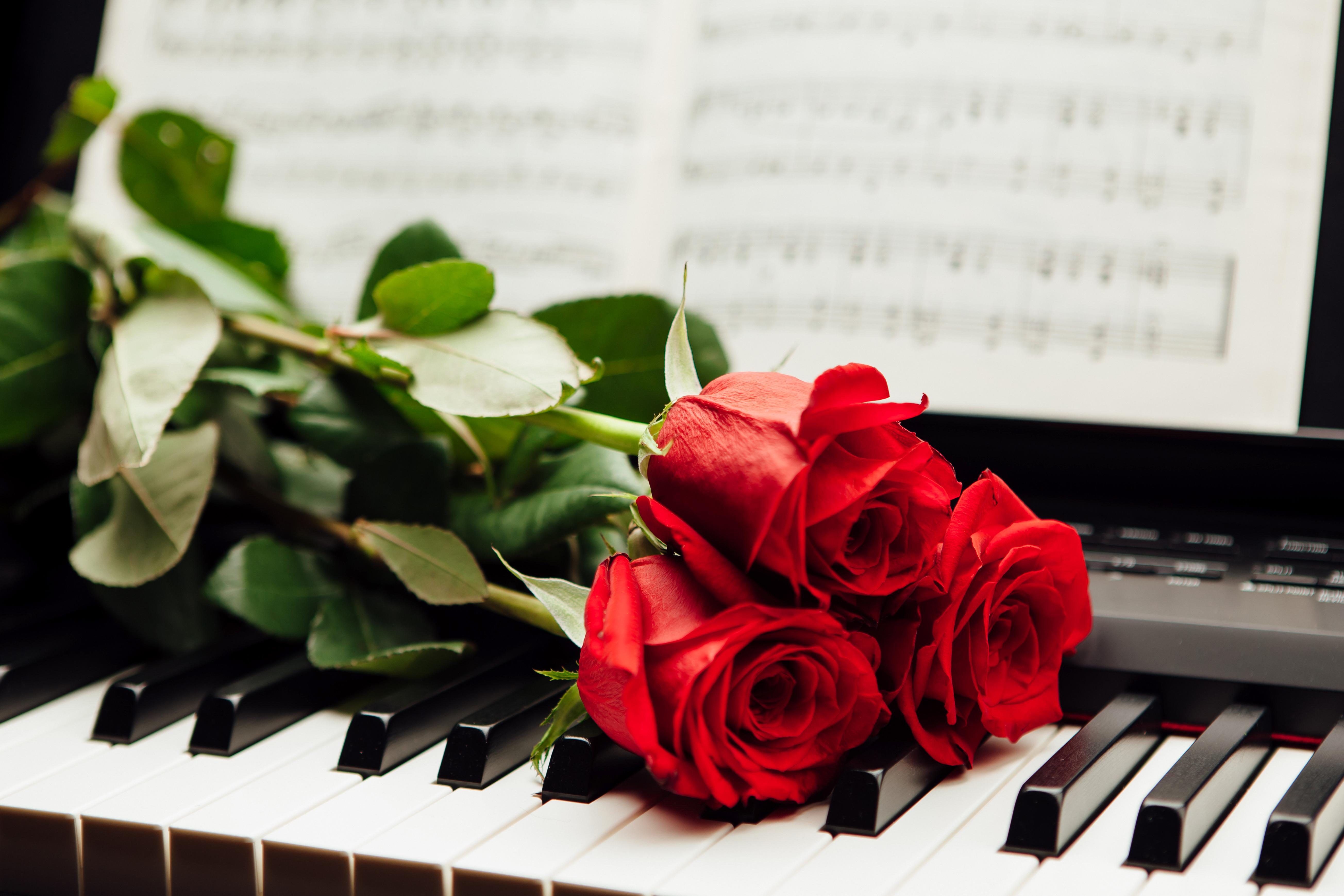 Обои на рабочий стол рояль розы