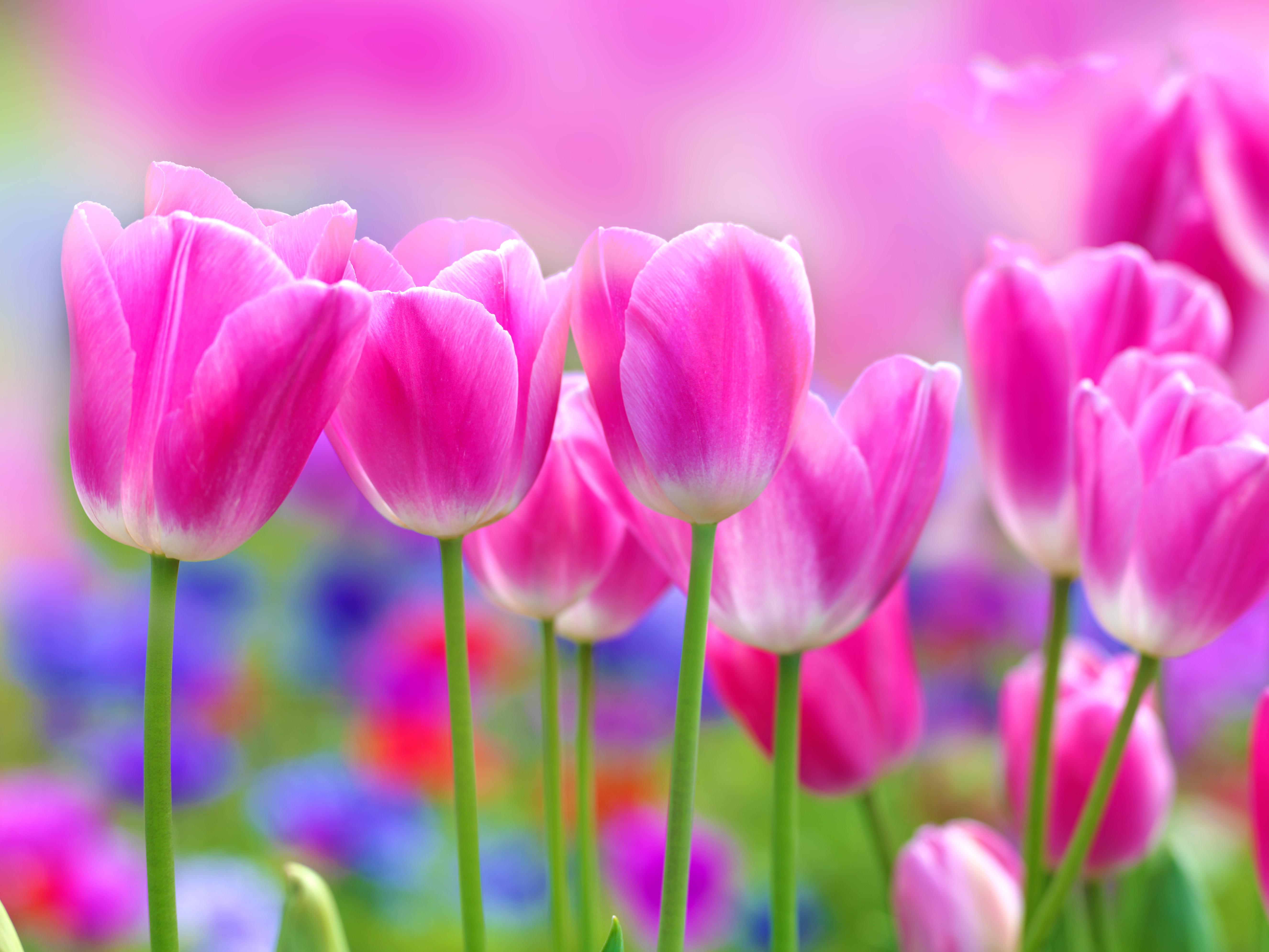 Flower - HD1920×1440