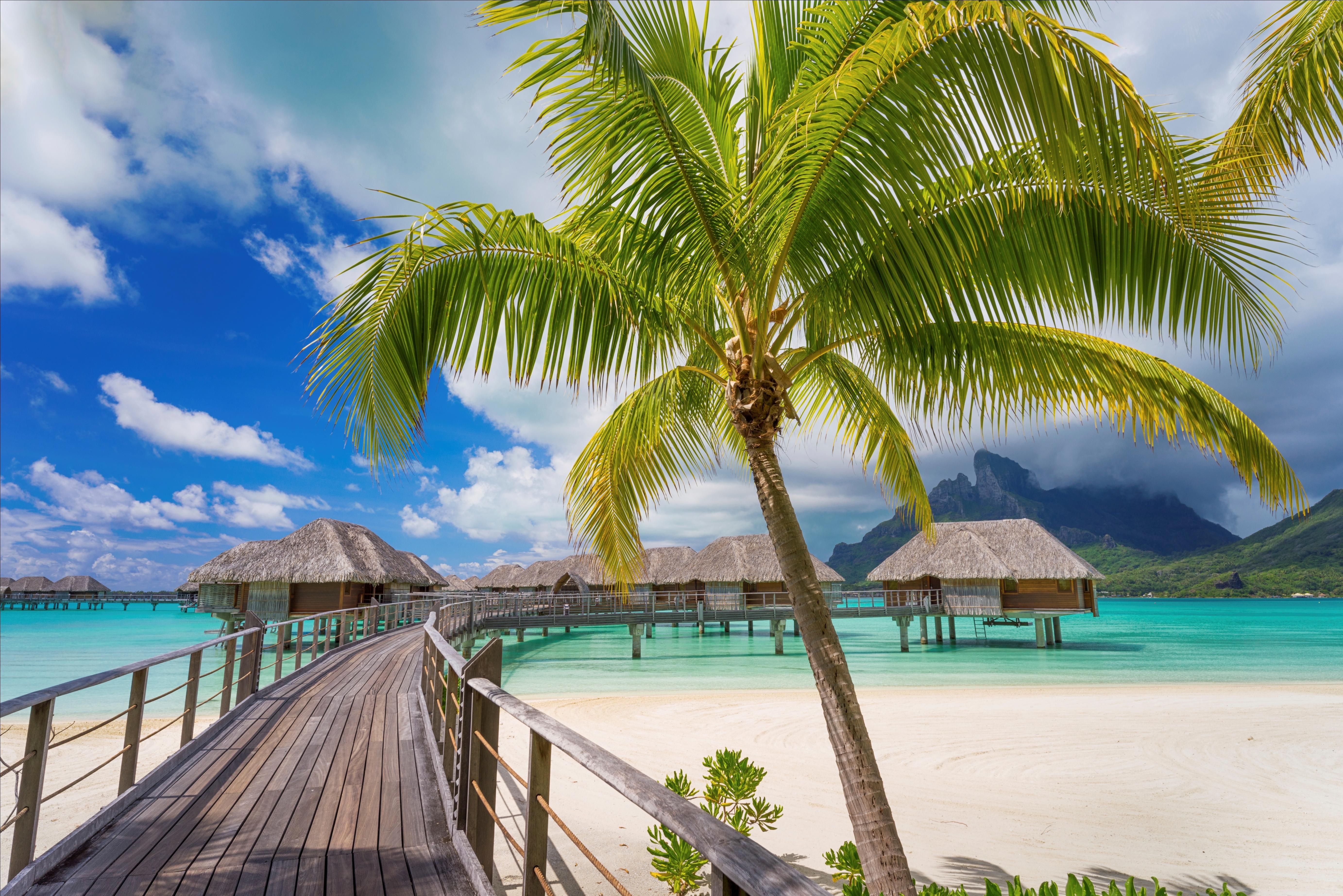 Картинка с пальмами и песком