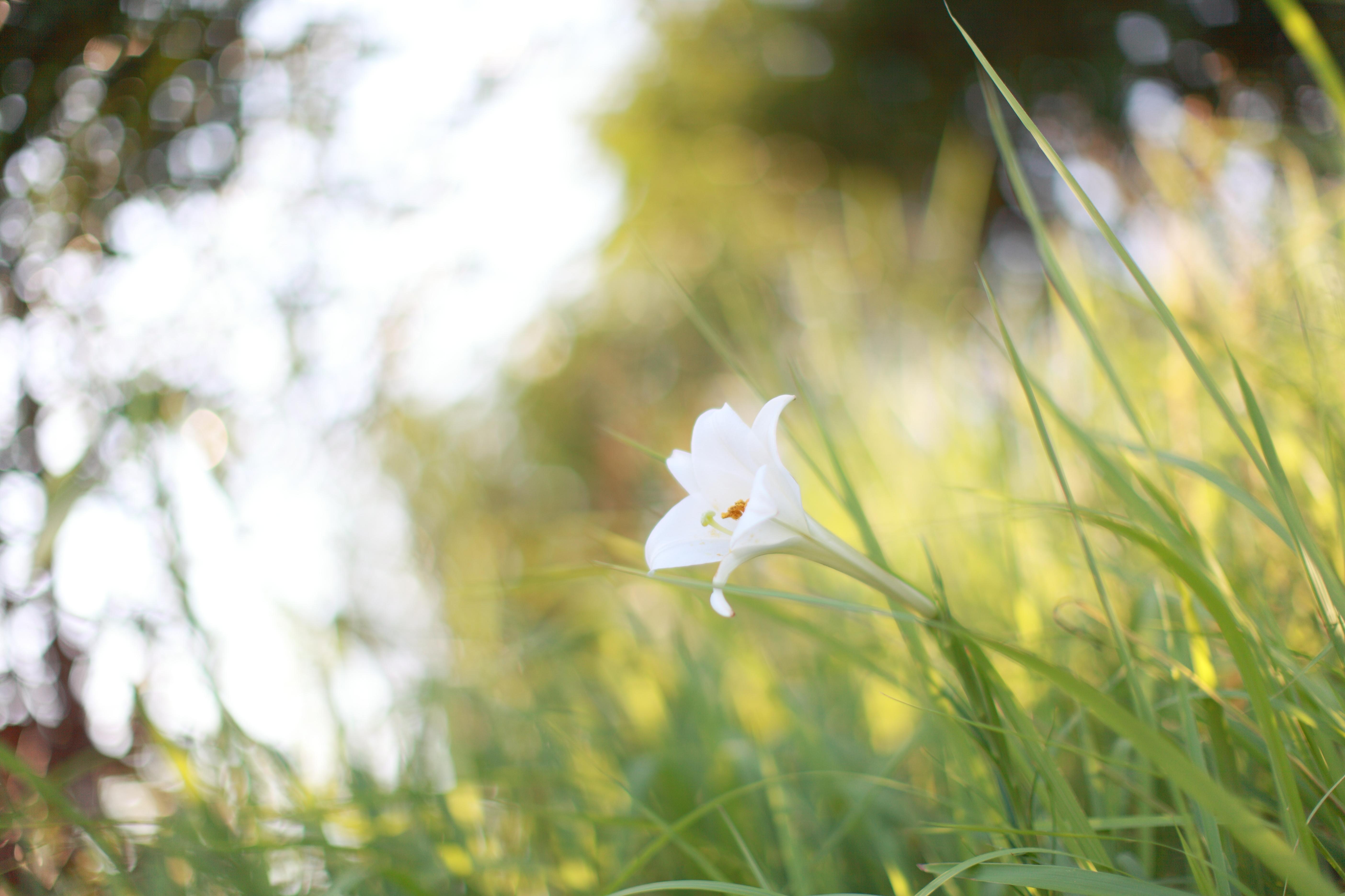 Картинки белый цвет в природе