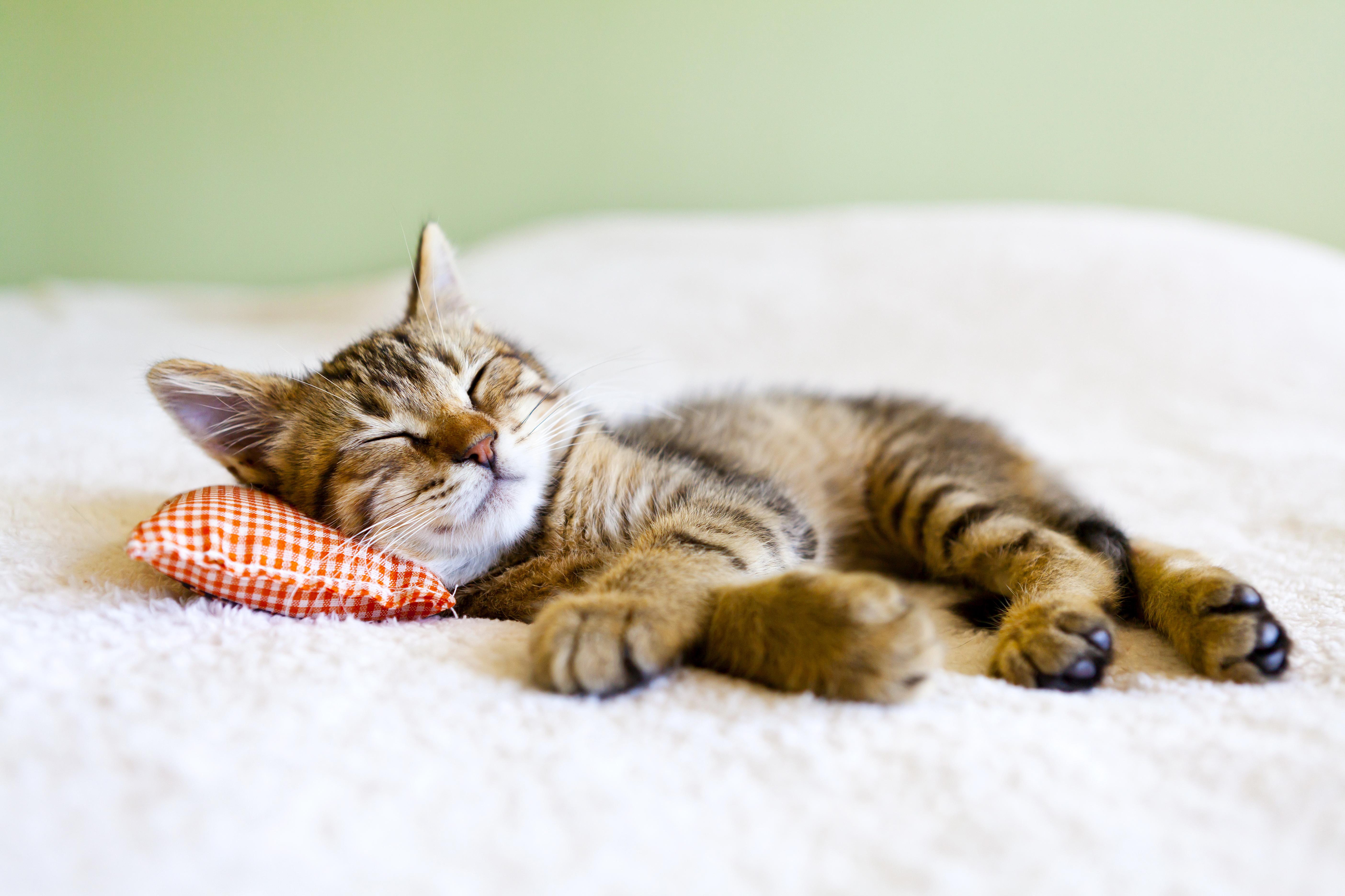 репетиторы, если кошка лежит на столе к чему это Керамическая