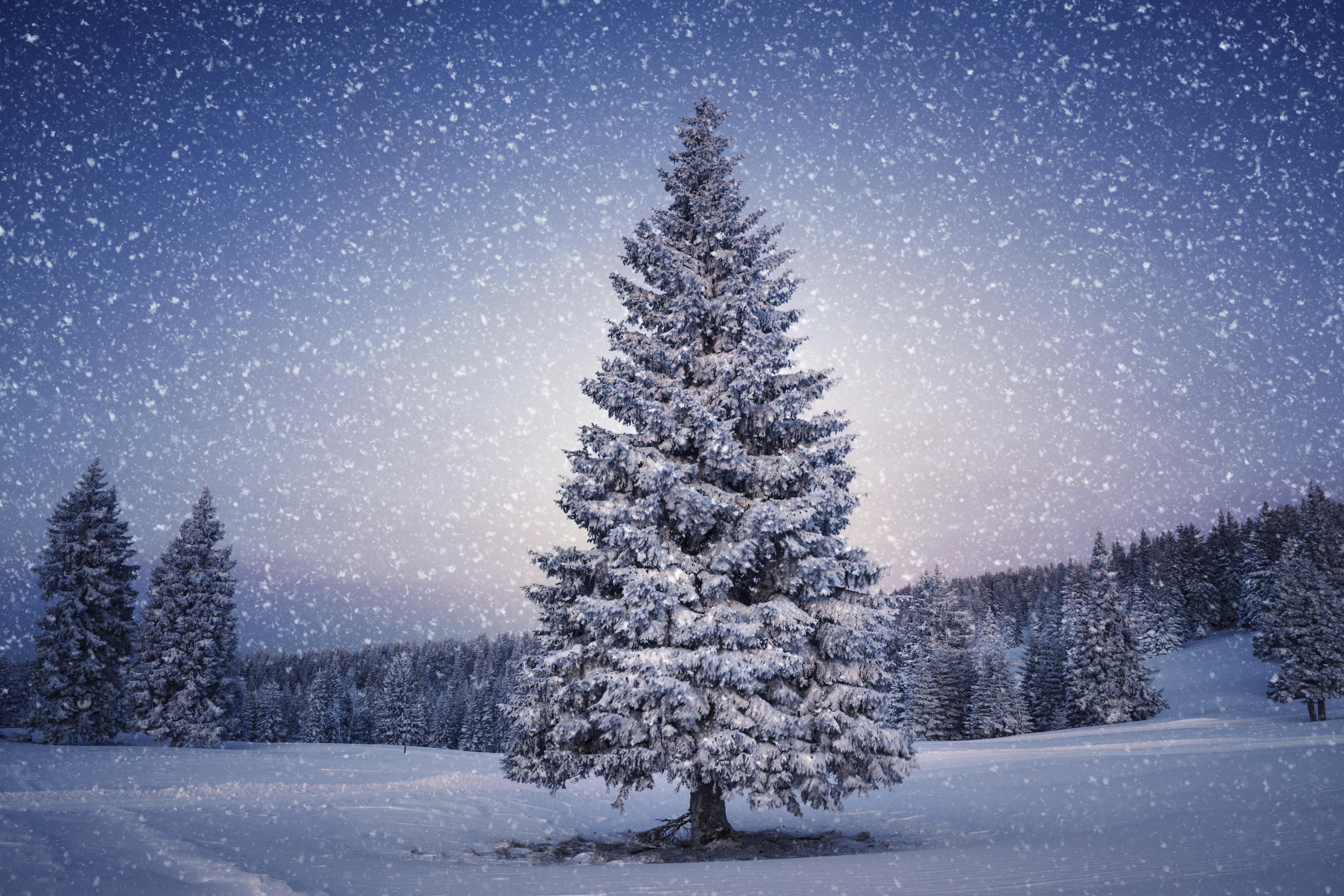картинки новогоднего леса жучок