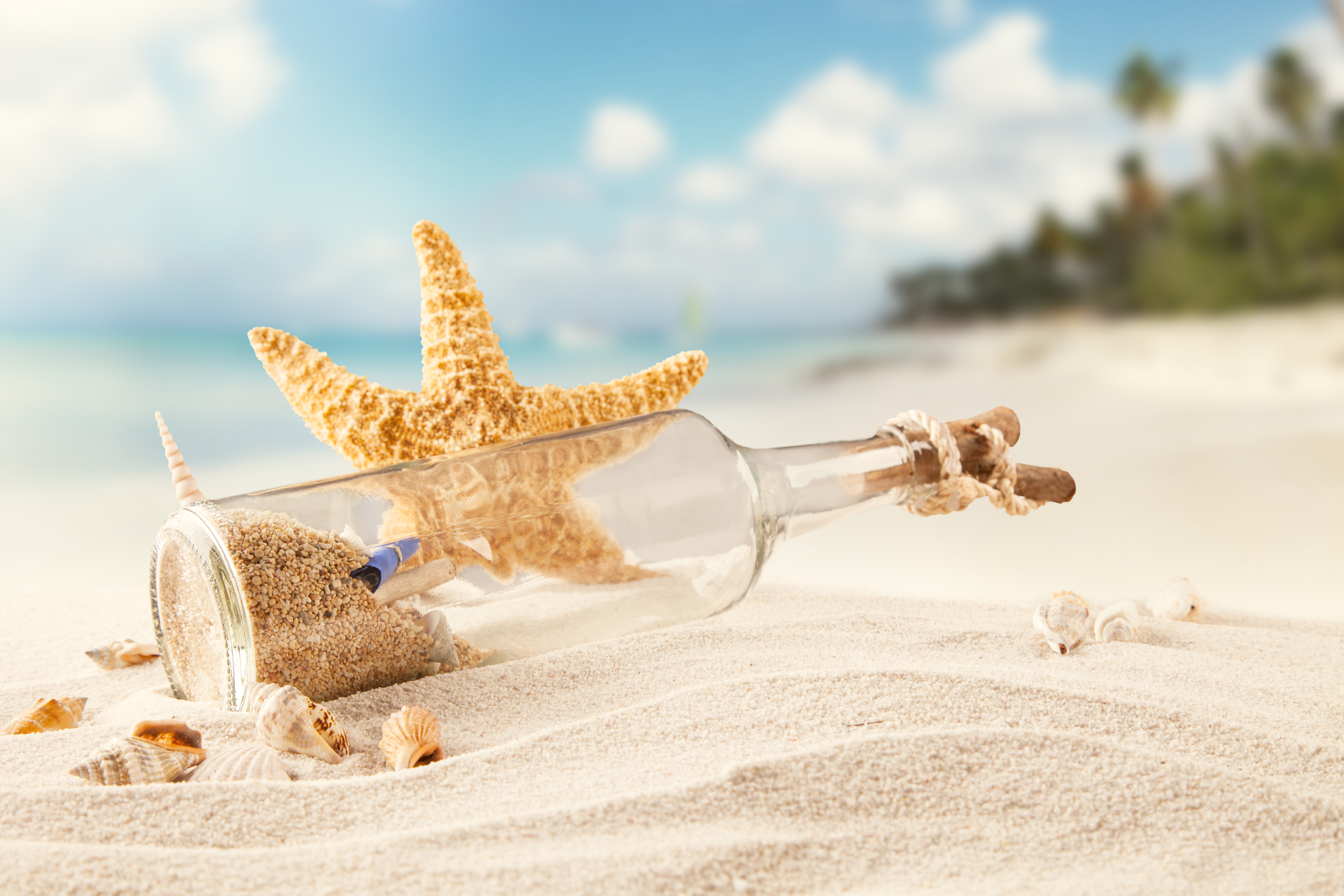 действий фотообои море пляж морская звезда верхней нижней челюстях