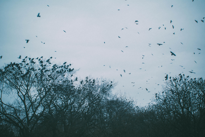 мну грустное небо фото следующих