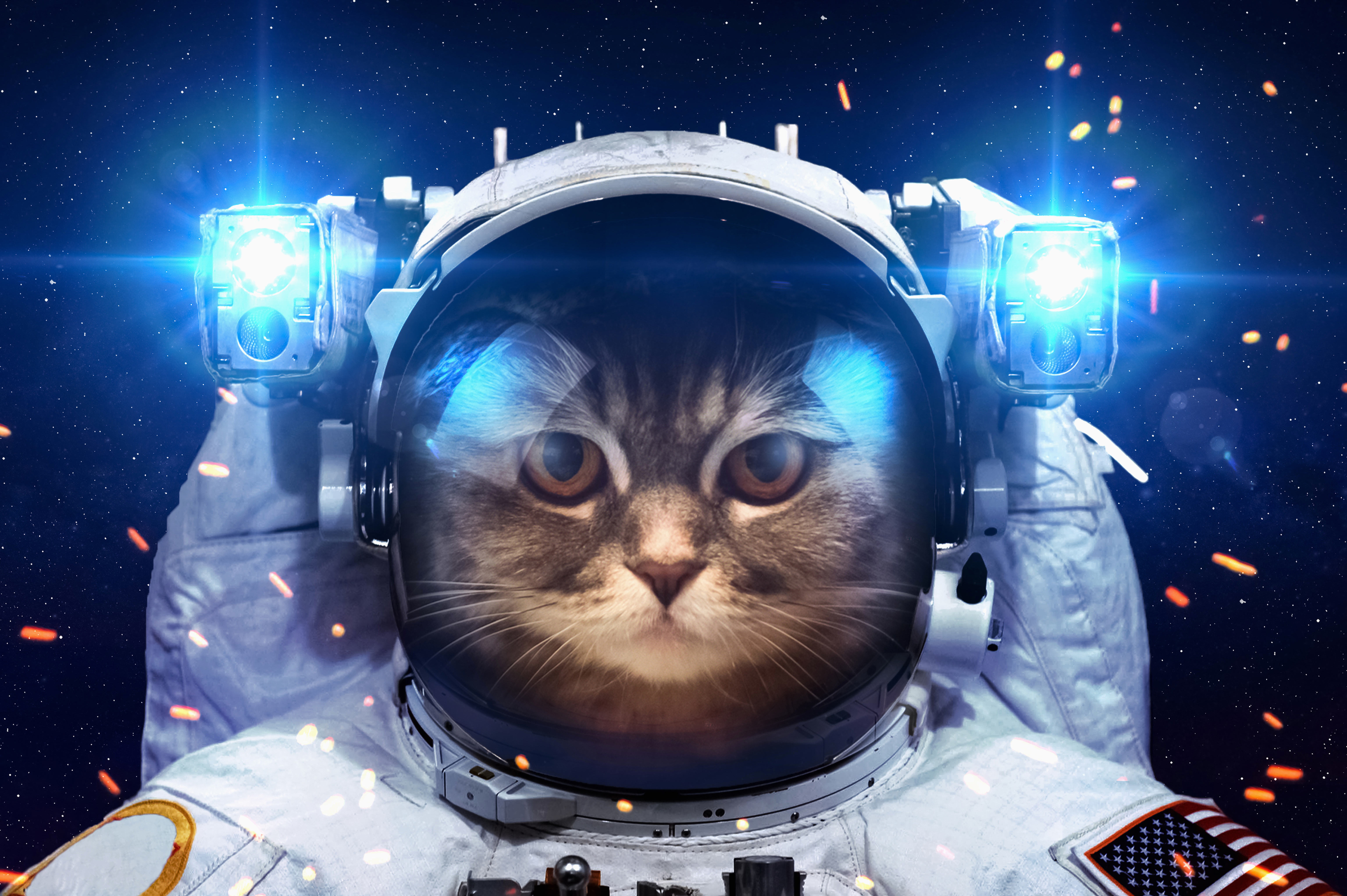 animals in space nasa -