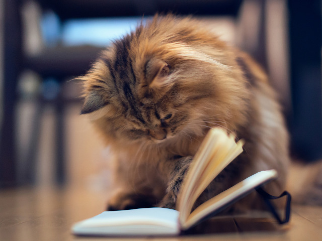 Картинки по запросу кошка и книга