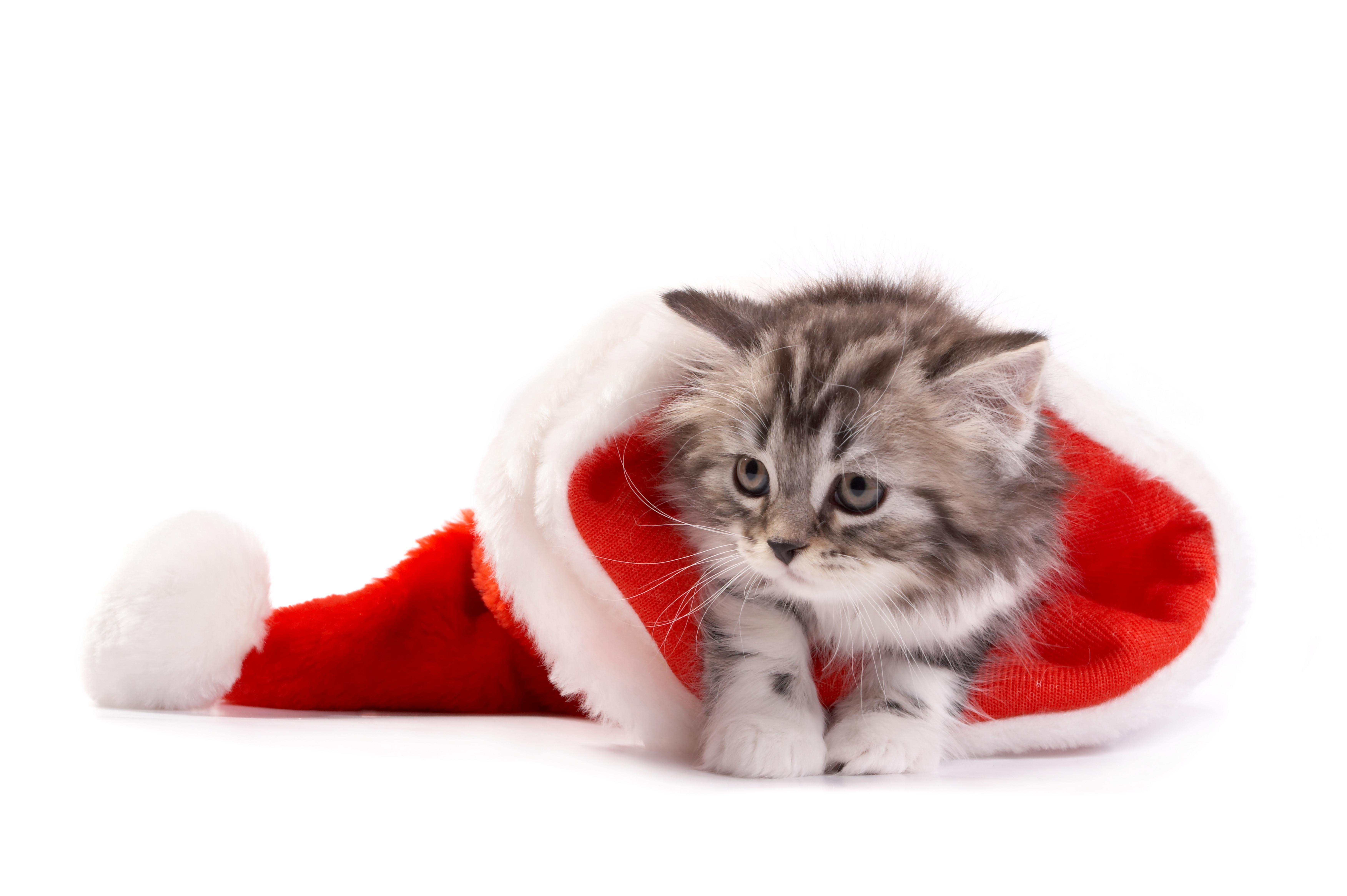 котенок в ботинке  № 2016605 загрузить