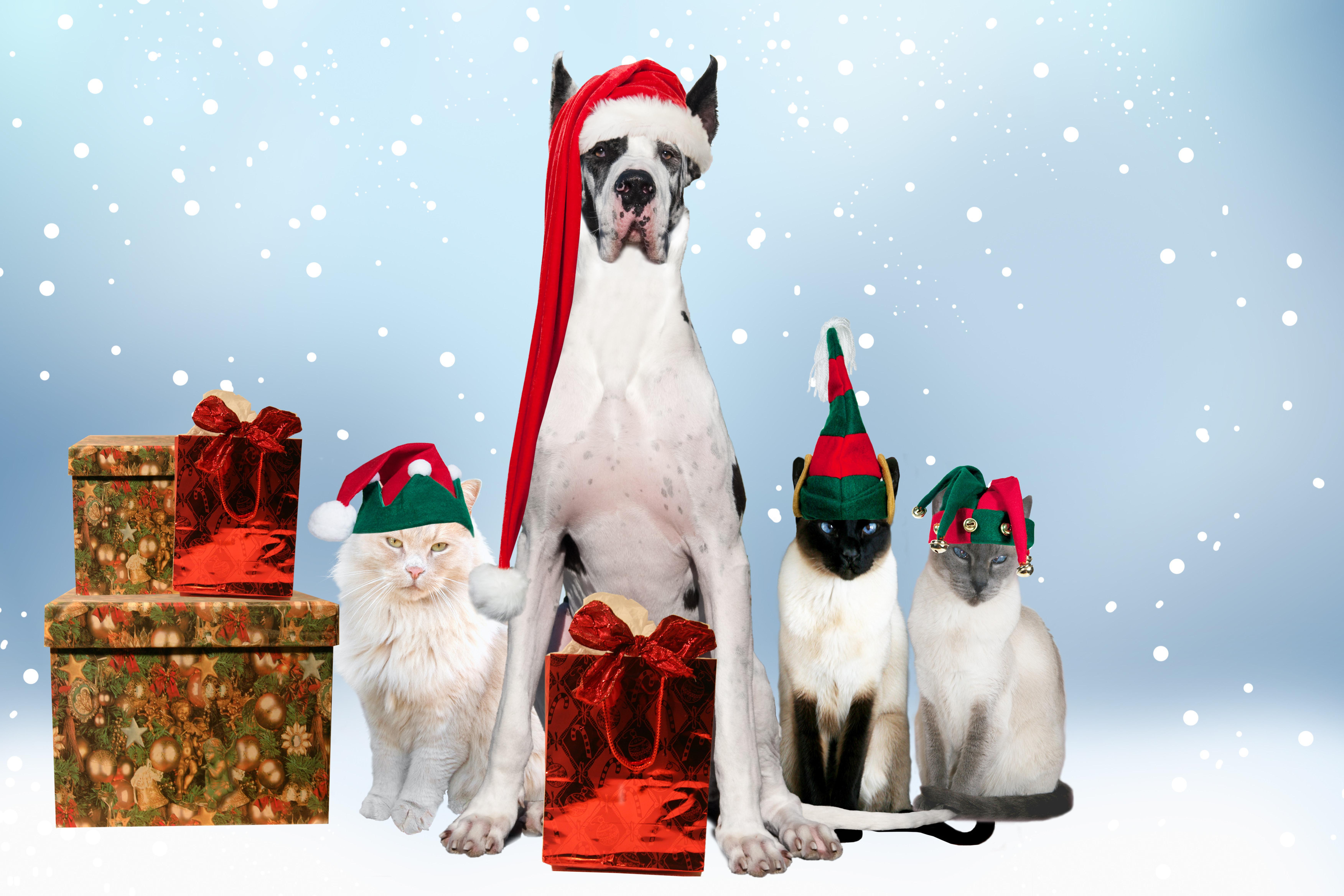 Поздравление с новым годом сбербанк кошки