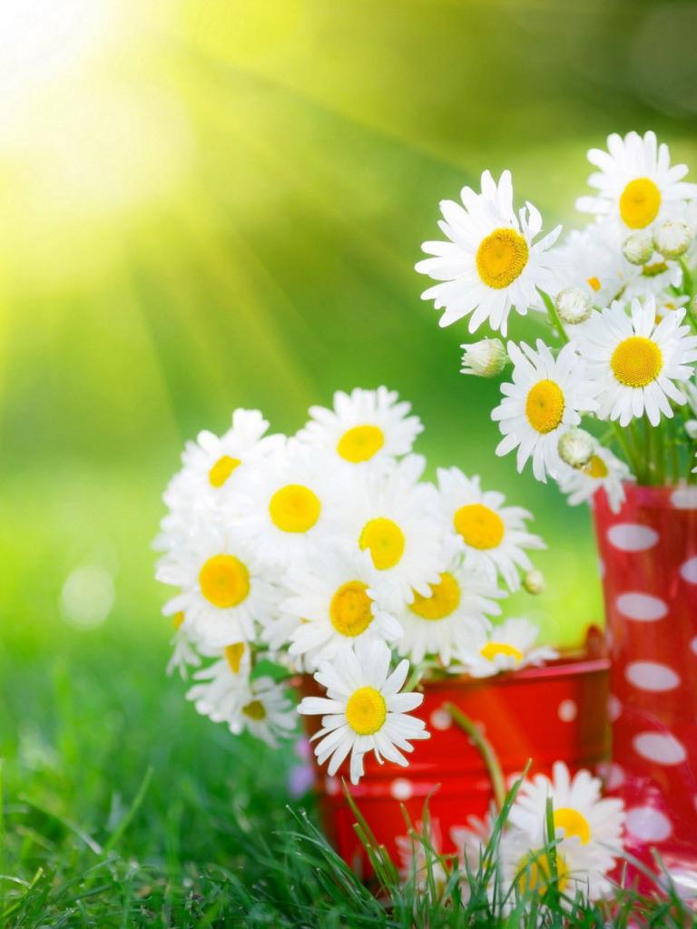 открытки цветы к дню семьи стоимость сравнению