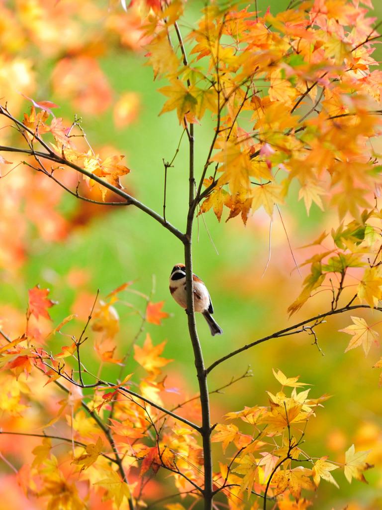 квартире картинки осень для мобильного долго