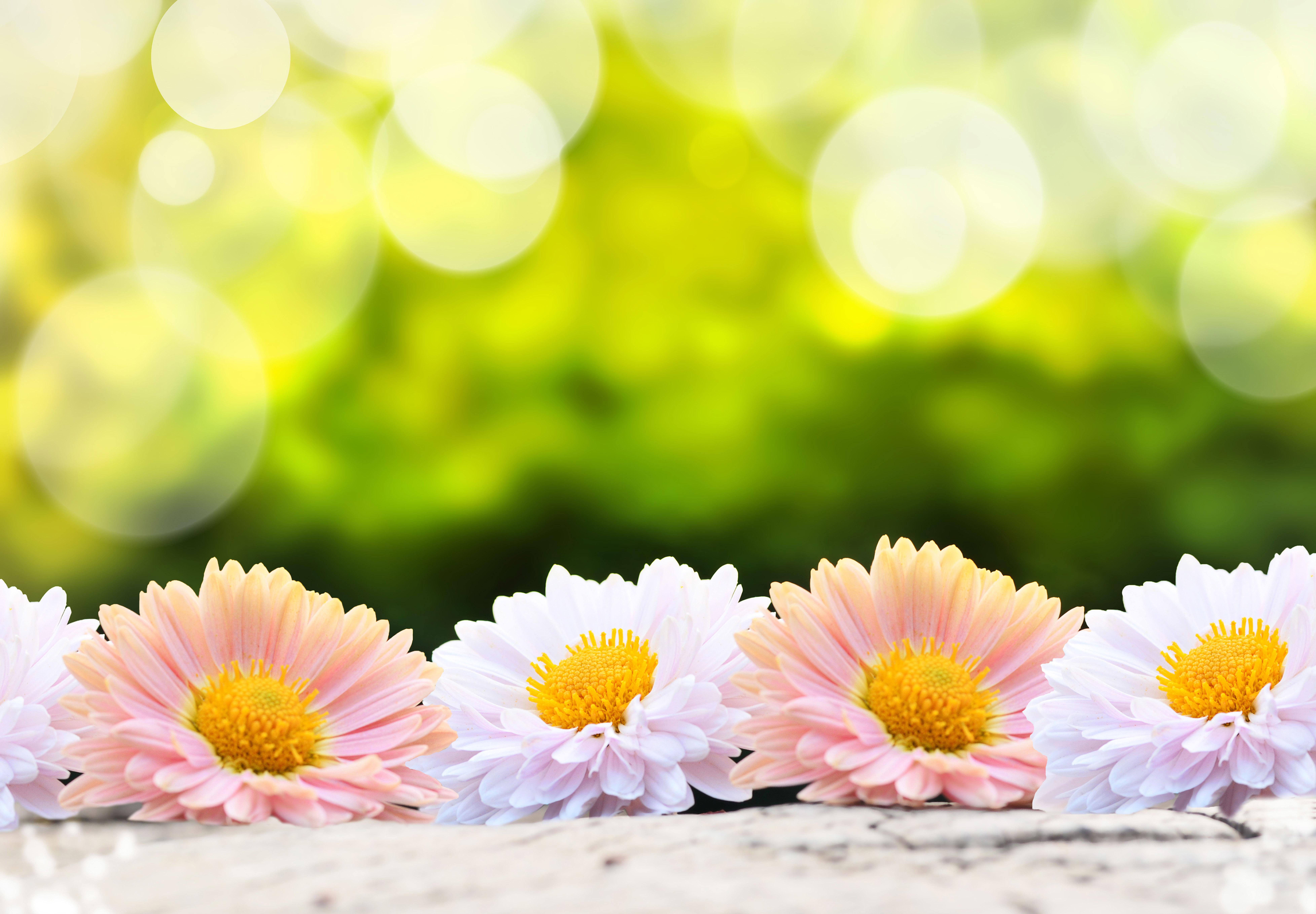 Обои размытость, цветы. Цветы foto 7