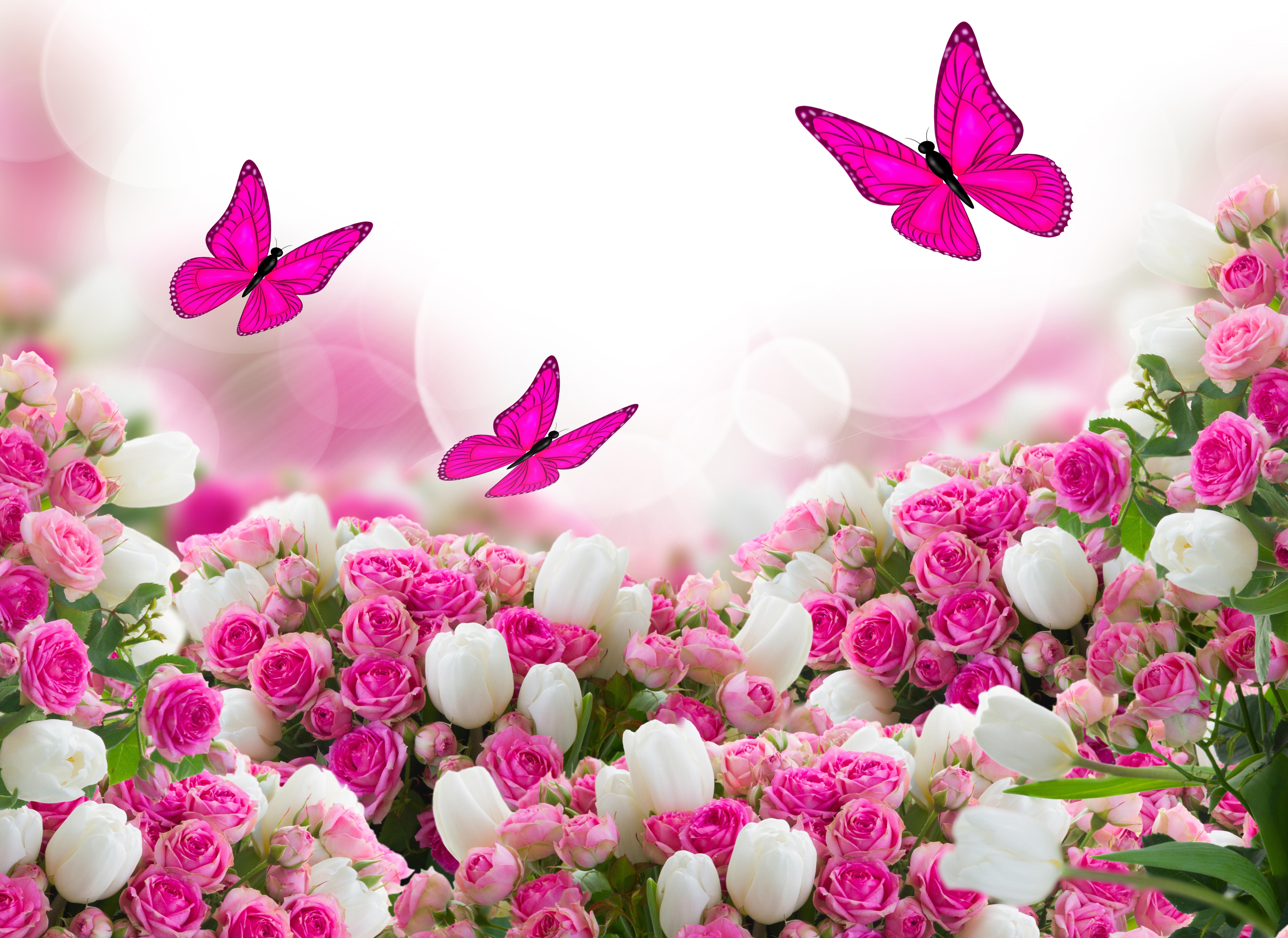 Цветы бабочки обои на рабочий стол
