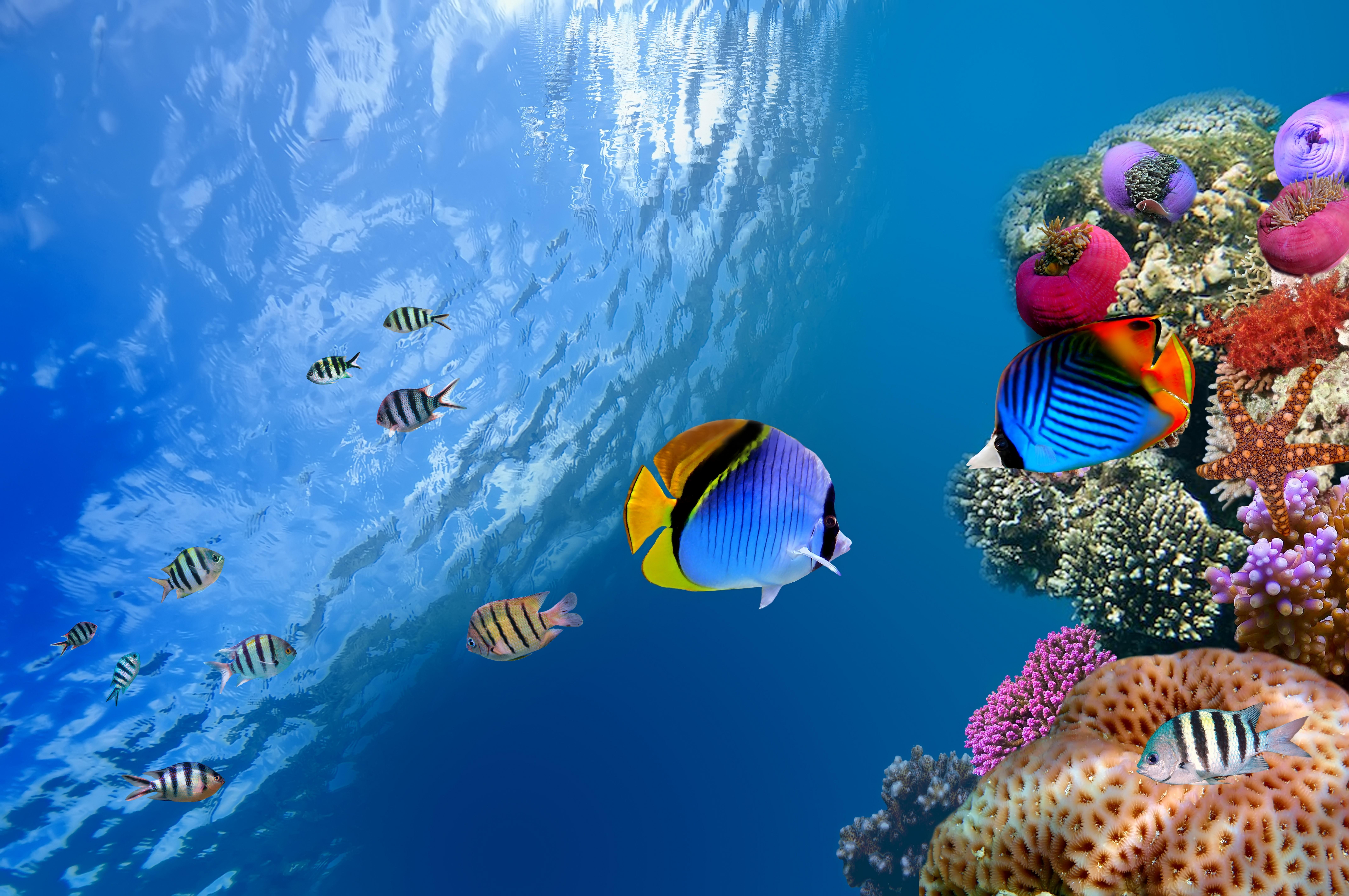 Яркие краски подводного мира  № 618945  скачать