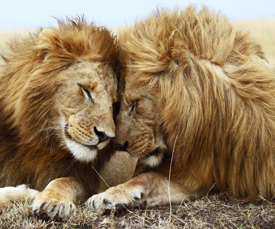 Картинки влюбленных животных с надписями