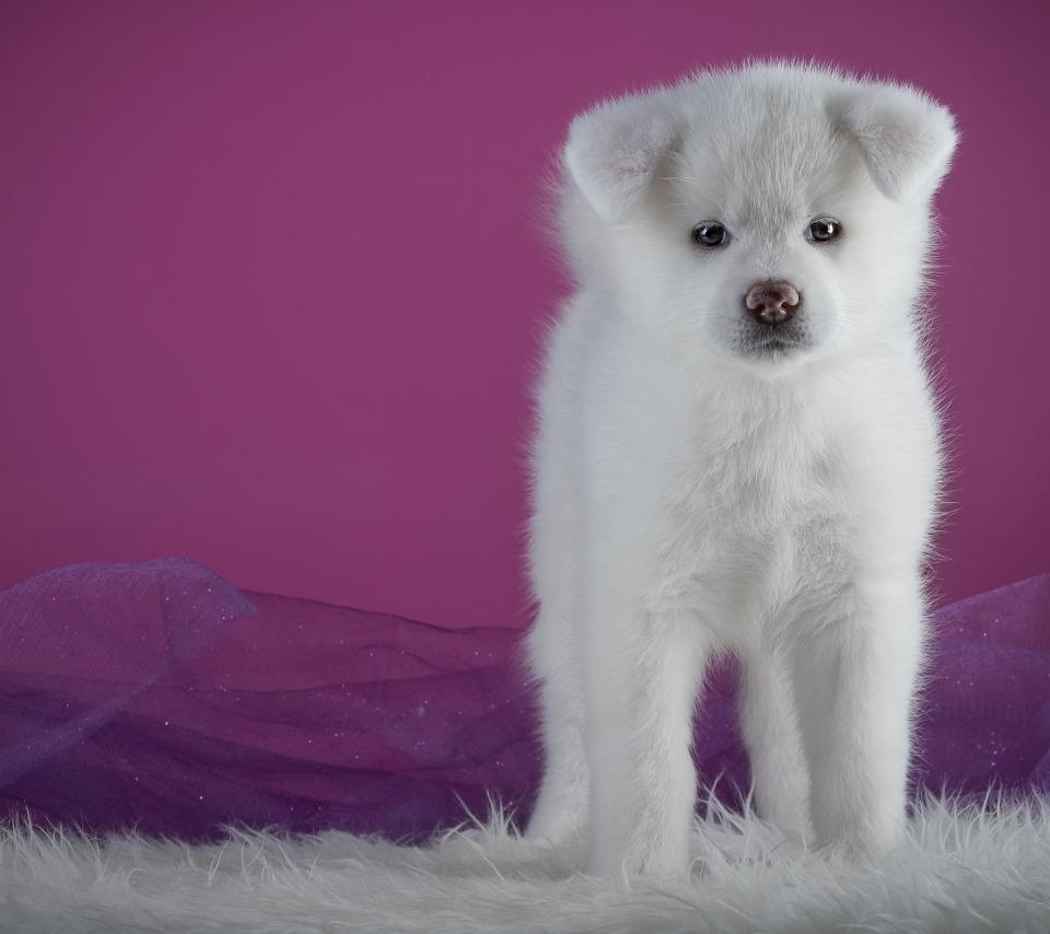 специальная картинки с белыми щенками поддержкой стала старшая