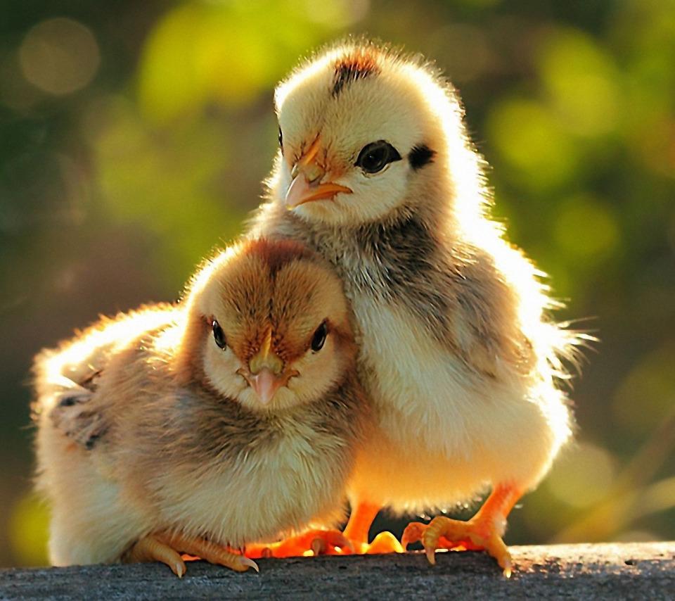 Картинки доброе утро прикольные с животными и птицами