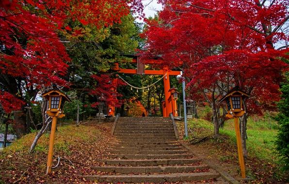Картинка осень, листья, деревья, парк, Япония, фонари, лестница, ступени, красочно, Fujiyoshida