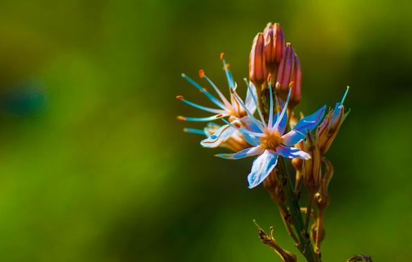 Картинка цветок, природа, лепестки, экзотика