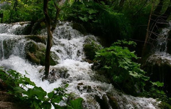 Картинка зелень, вода, пейзаж, природа, путешествия, отдых, озера, пороги, водопадики, плитвитские