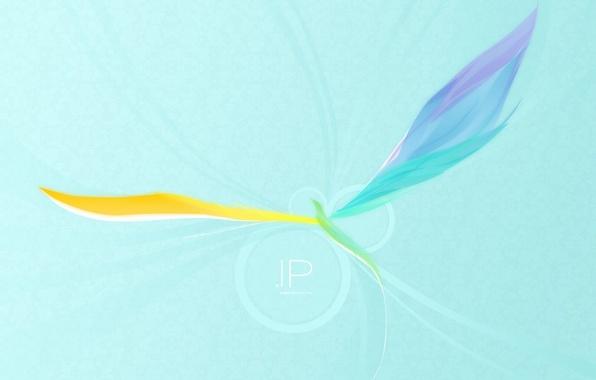 Фото обои минимализм, вектор, крылья, Птица