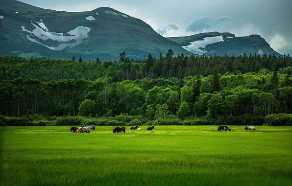 Картинка зелень, поле, лес, лето, трава, деревья, горы, лошади