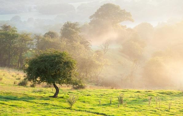 Картинка поле, лето, пейзаж, природа, туман, дерево, красота, утро
