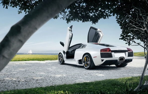 Картинка Lamborghini, Sky, Grass, Sun, Murcielago, White, Supercar, Trees, Rear, LP640-4