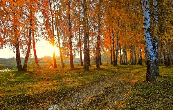 Картинка дорога, осень, солнце, пейзаж, закат, природа, желтые листья, березы