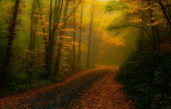 Картинка дорога, осень, лес, деревья, природа, туман, листва, обработка, США, Северная Каролина