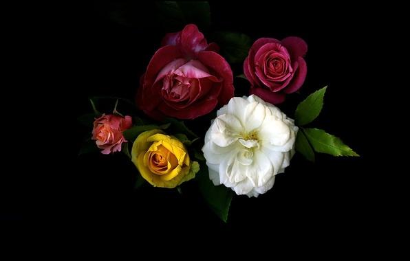 Картинка свет, фон, обои, роза, тень, букет, лепестки