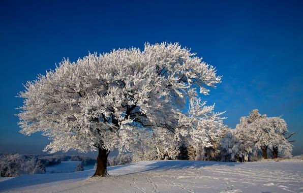 Картинка фото, Природа, Зима, Деревья, Снег